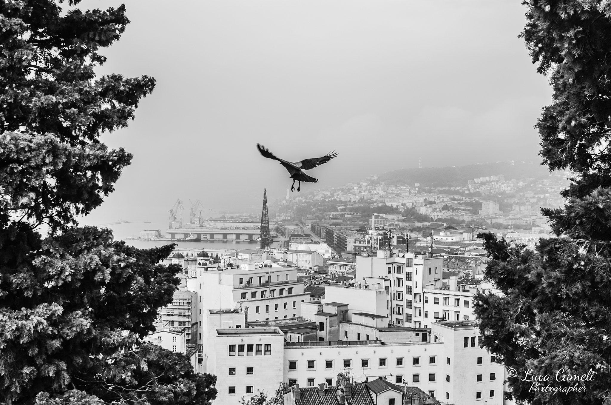 Volando Su Trieste - Parco Della Rimembranza, Trieste. Selezionato da ArtFund - Maco Museum. © Luca Cameli Photographer