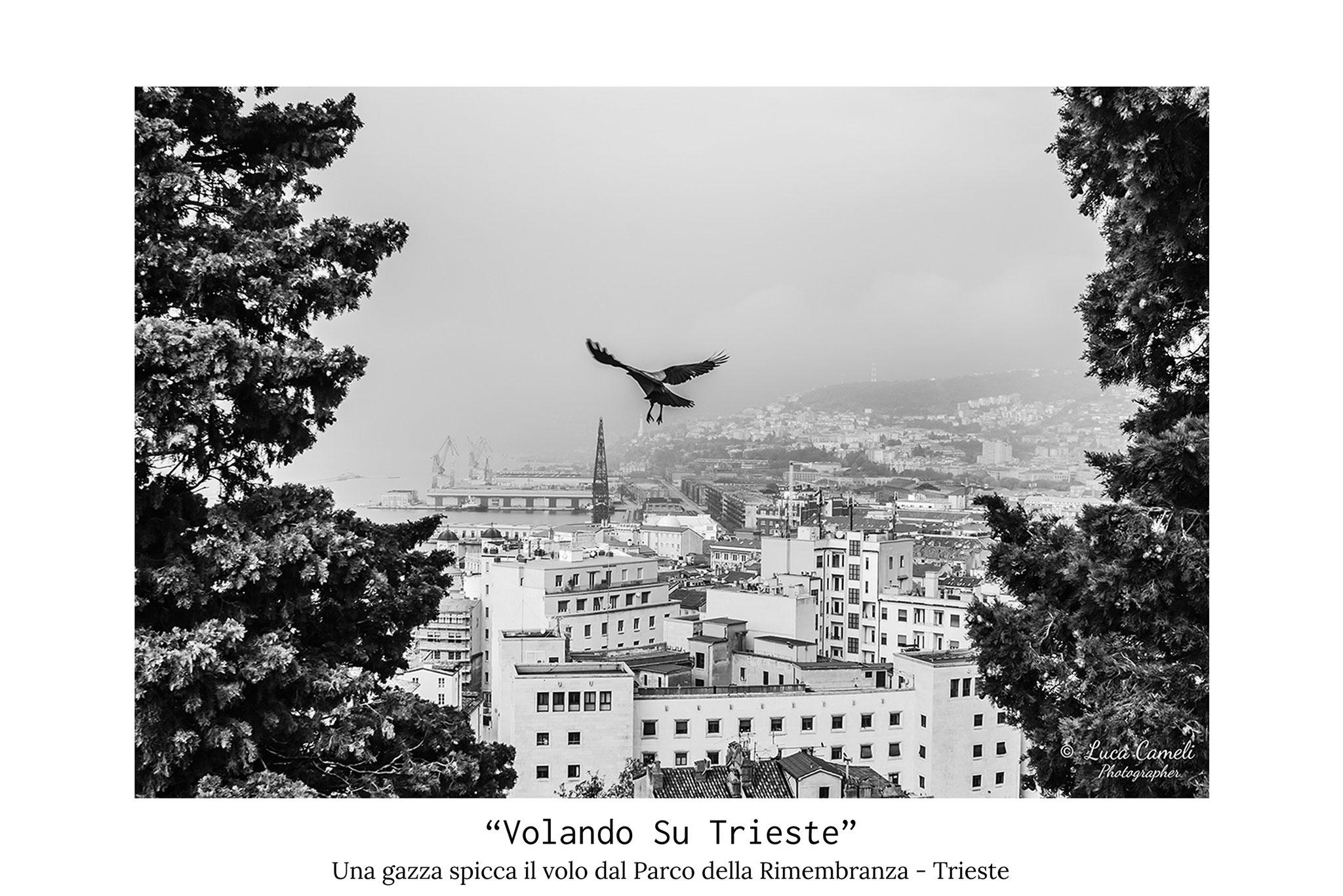 """""""Volando Su Trieste"""", Scorcio di Trieste vista dall'alto del Parco della Rimembranza con una gazza ladra che spicca il volo verso il centro della città. © Luca Cameli Photographer"""