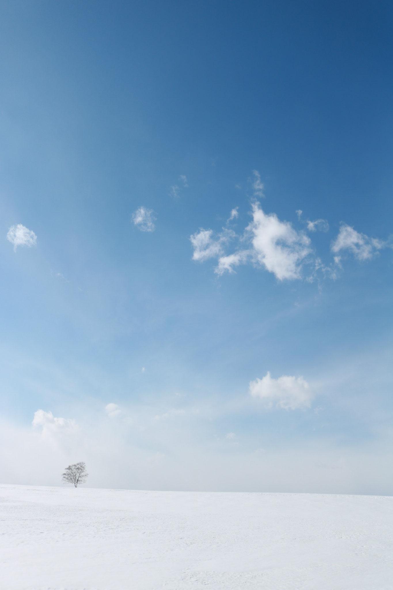 十勝晴れと雪原