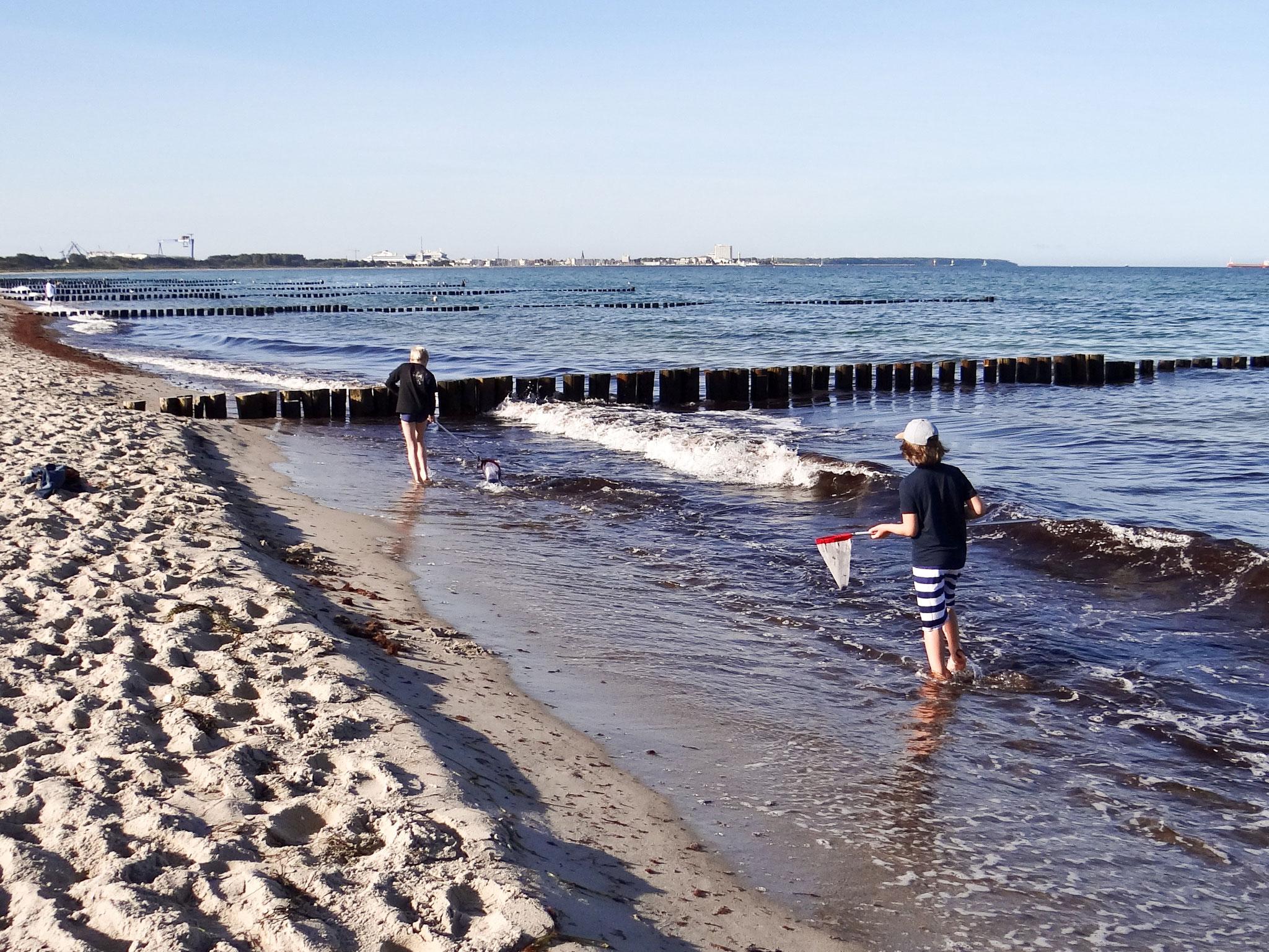 Die Lebewesen in und an der Ostsee nahmen die Rudi-Kinder im September unter die Lupe.