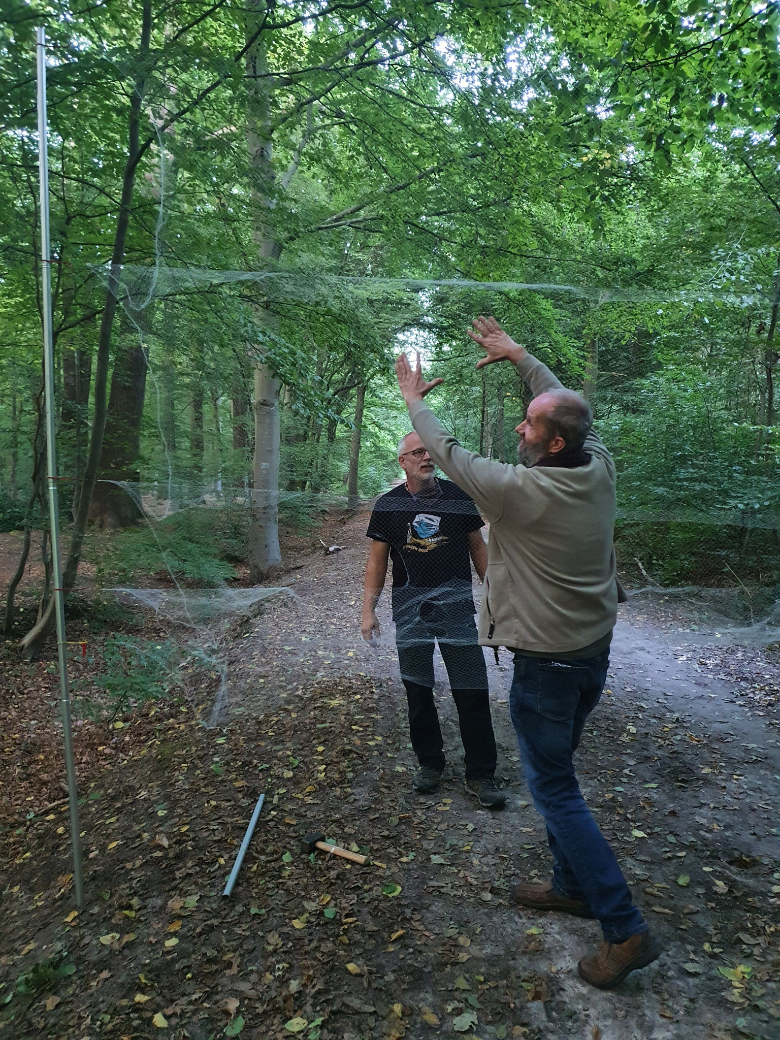 Aufbau des Fangnetzes für die abendliche Fledermausnacht