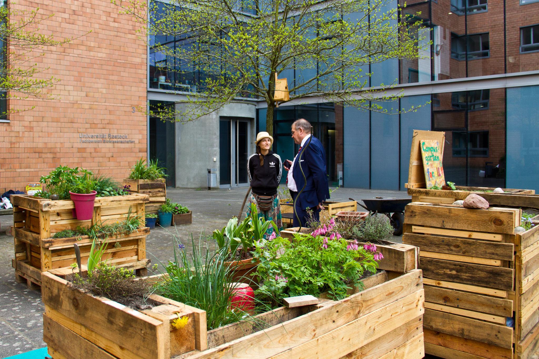 Wir mampfen mit dem Unirektor Kressebrote von unseren selbst gebauten Hochbeeten im Campusgarten.