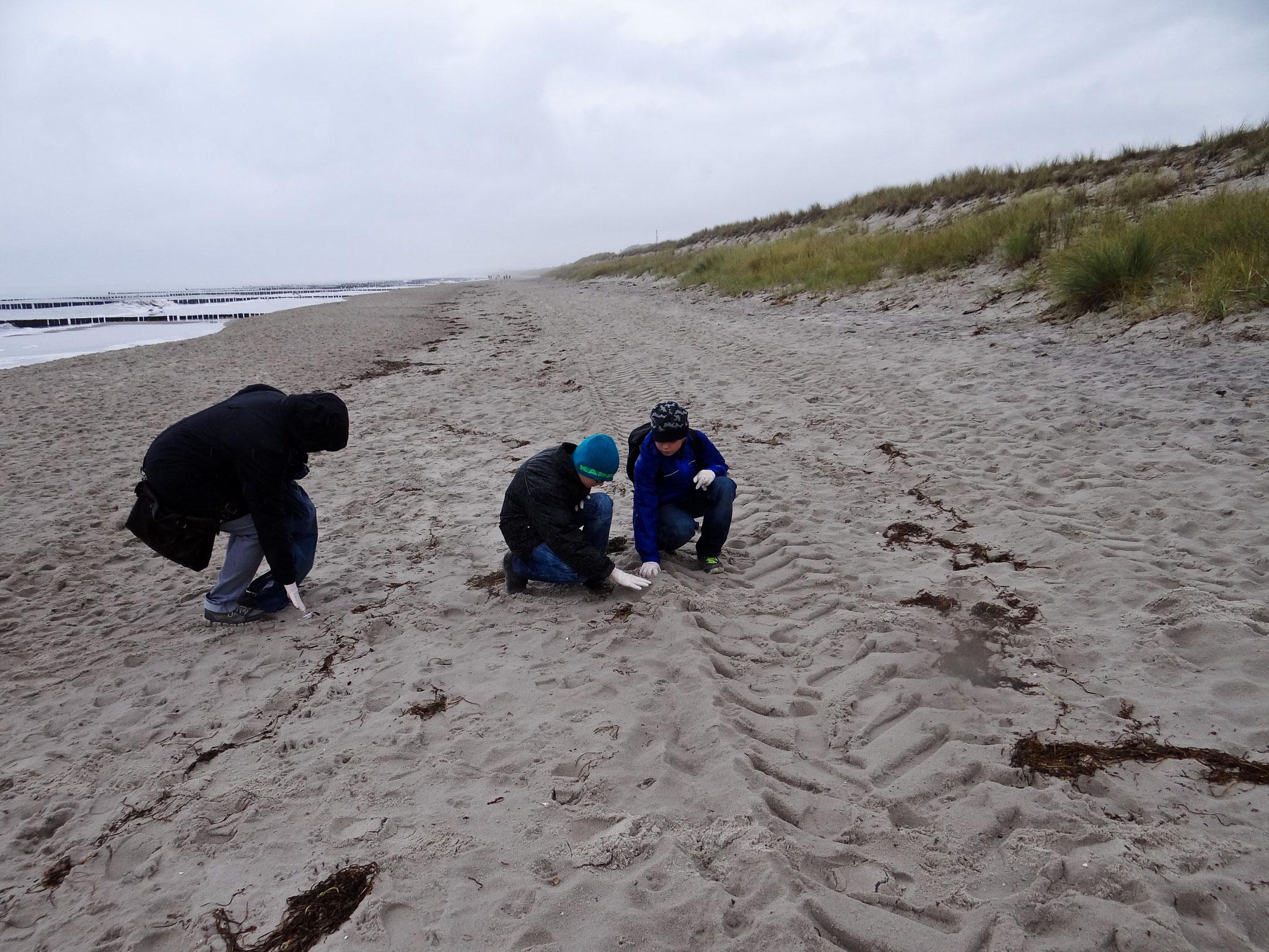 Leider haben wir nicht nur Küstenvögel am Strand entdeckt, sondern auch Müll.