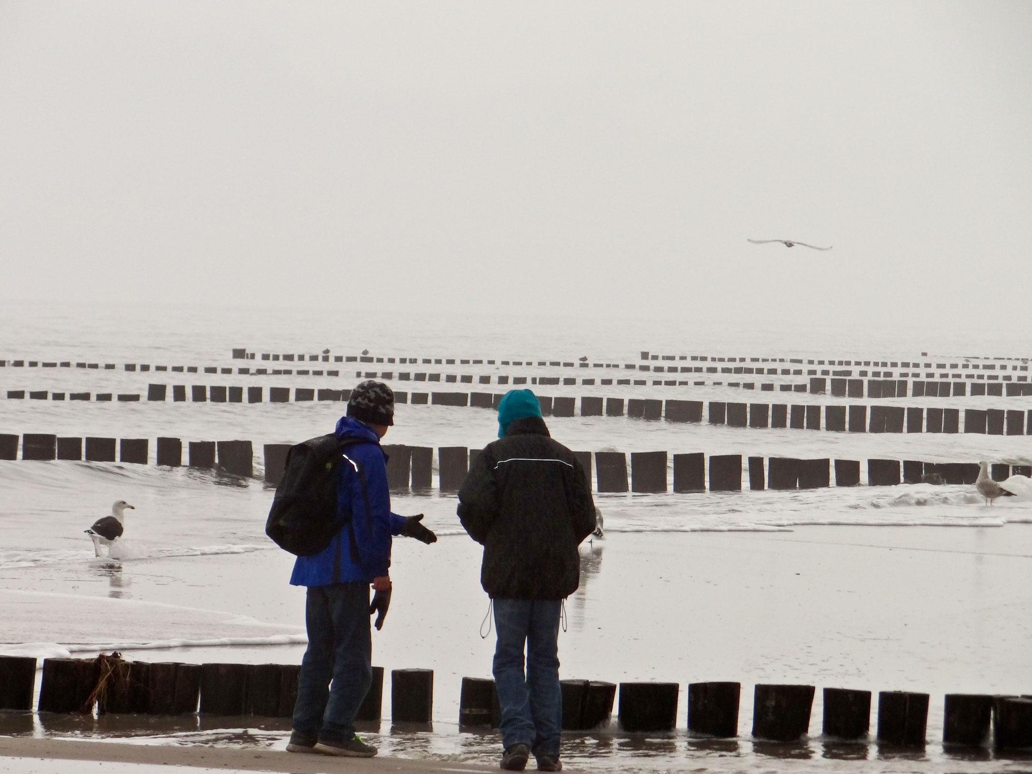 Küstenvögelbeobachtung am Strand im Oktober
