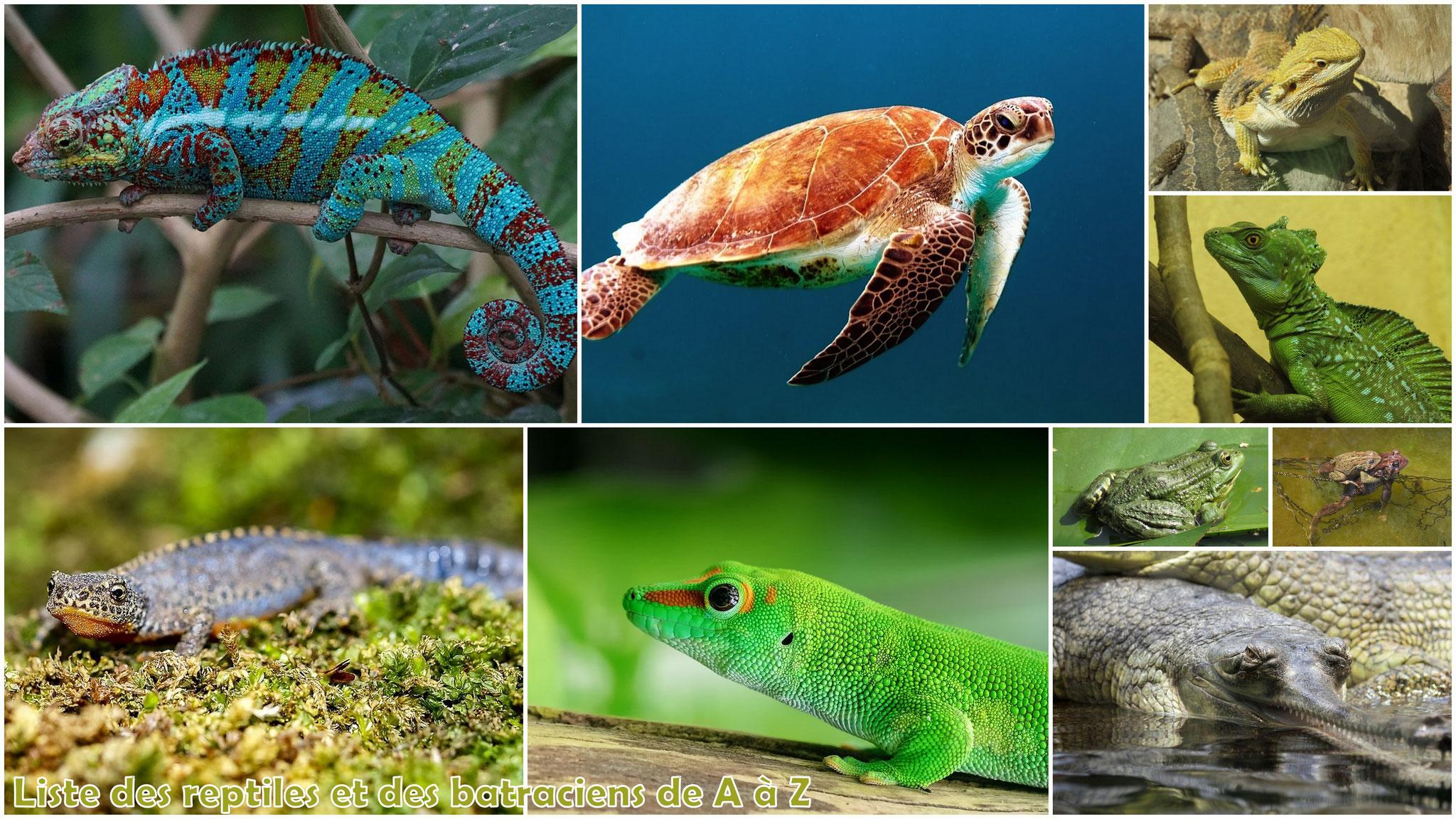 Les reptiles et amphibiens