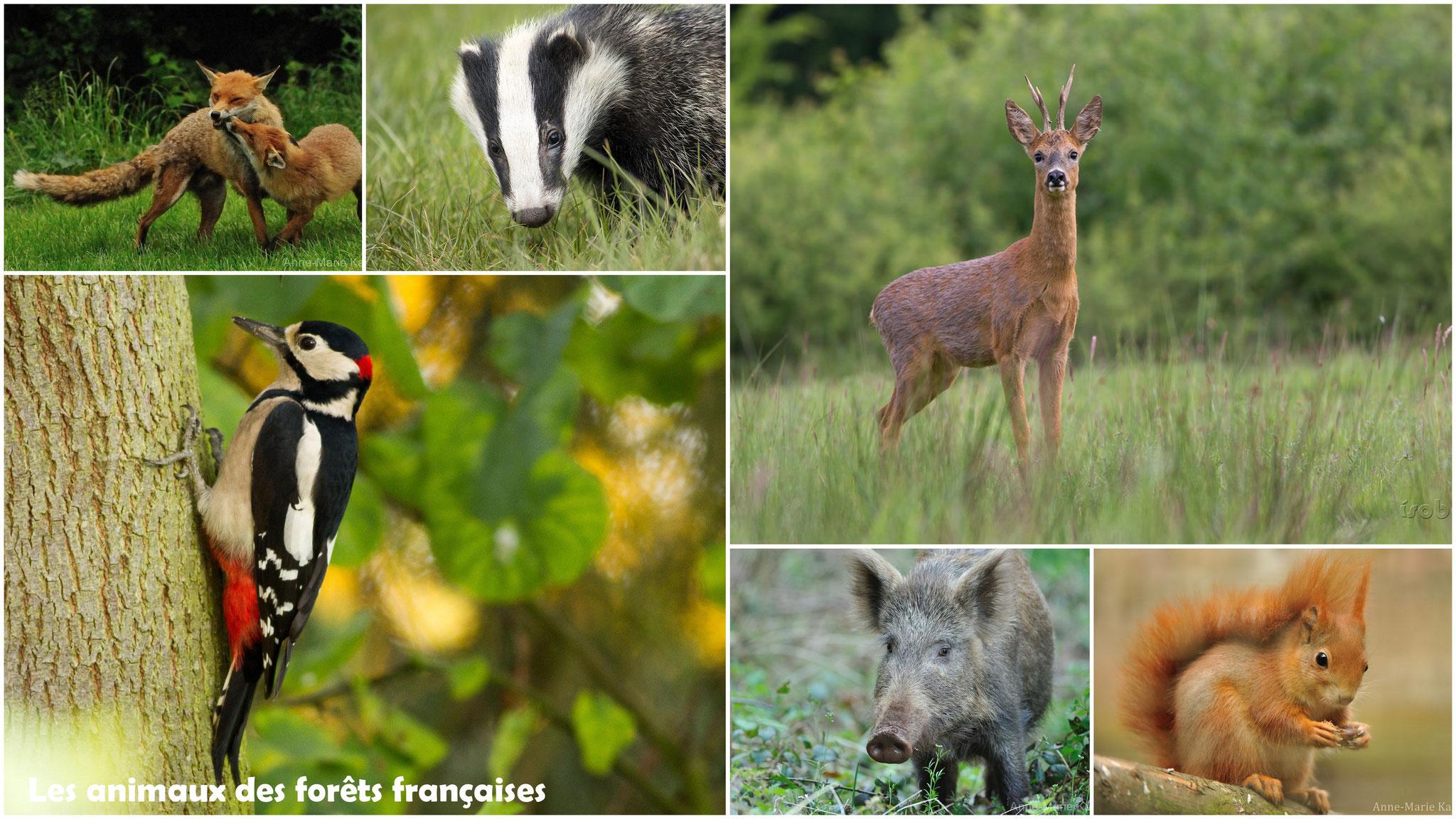 Les animaux des forêts françaises