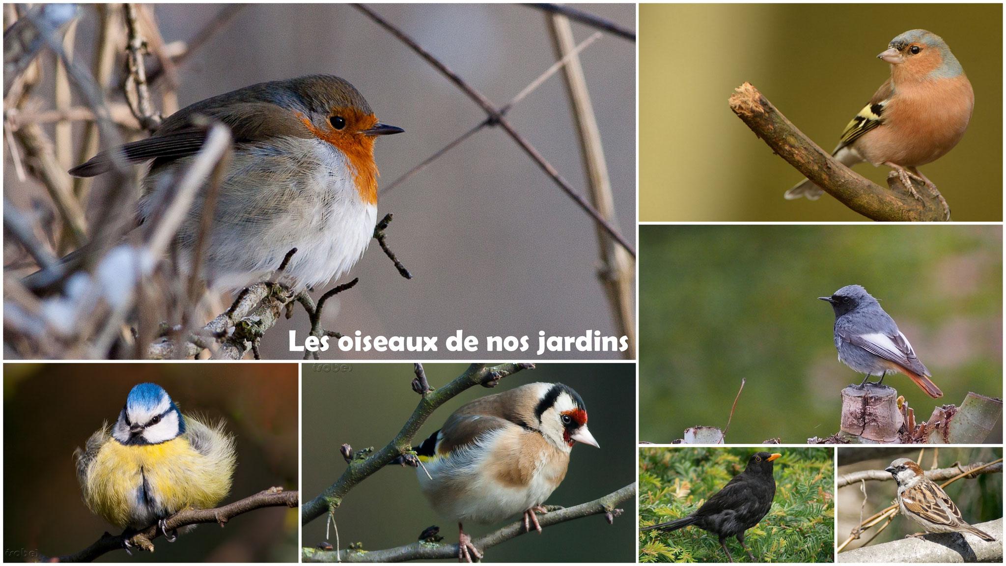 Les oiseaux de nos jardins