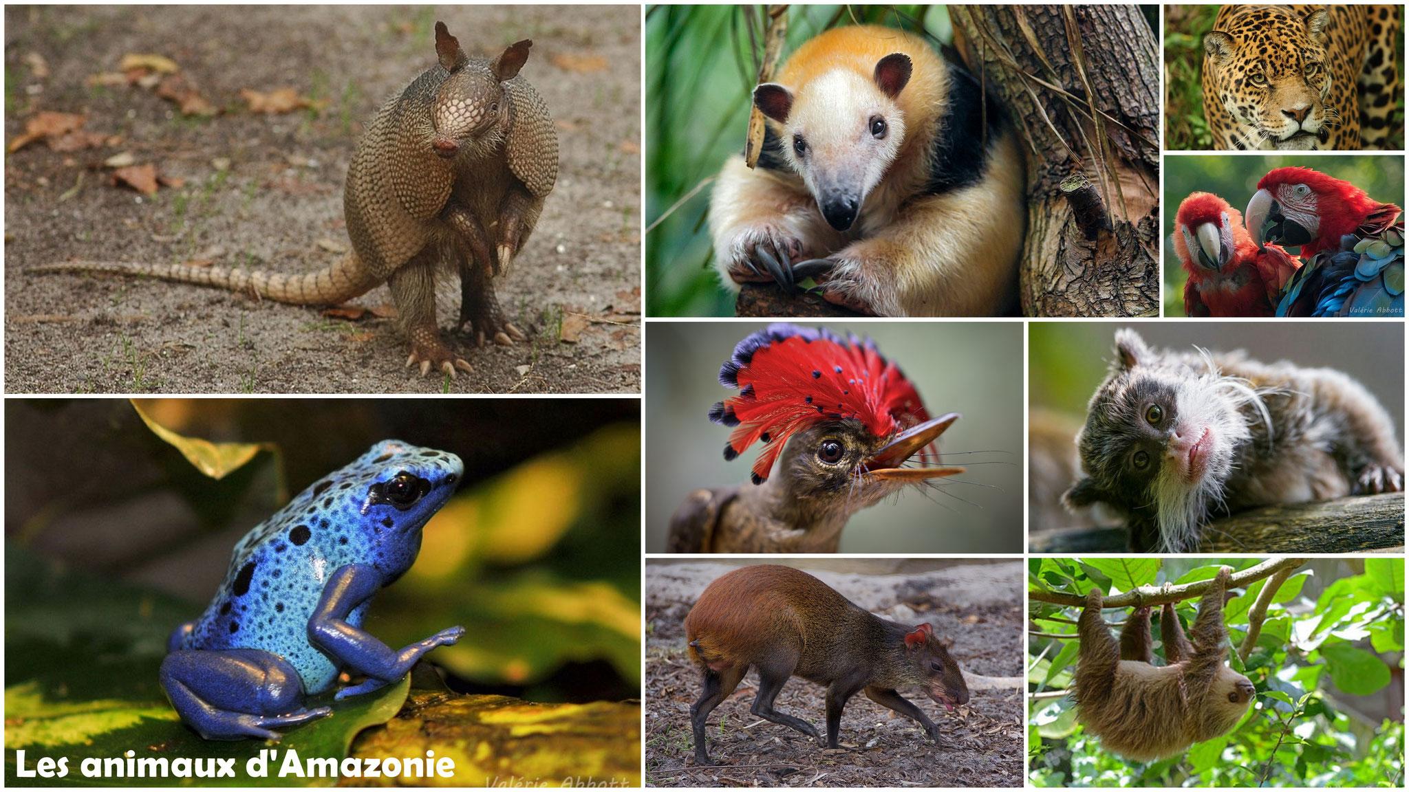 Les animaux d'Amazonie