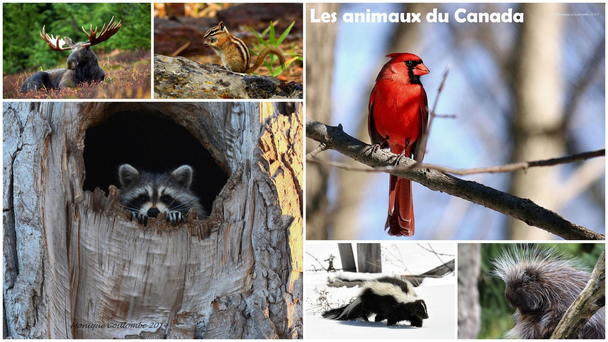 Les animaux du Canada et du Québec