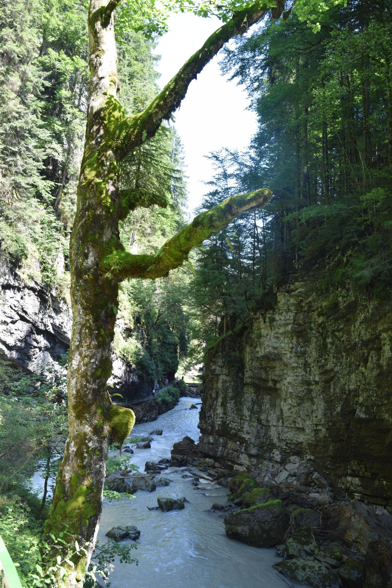 Meine Sommerferien im Allgäu. Mit Badespaß, Bergwanderungen, Schloss Neuschwanstein und der Breitachklamm.
