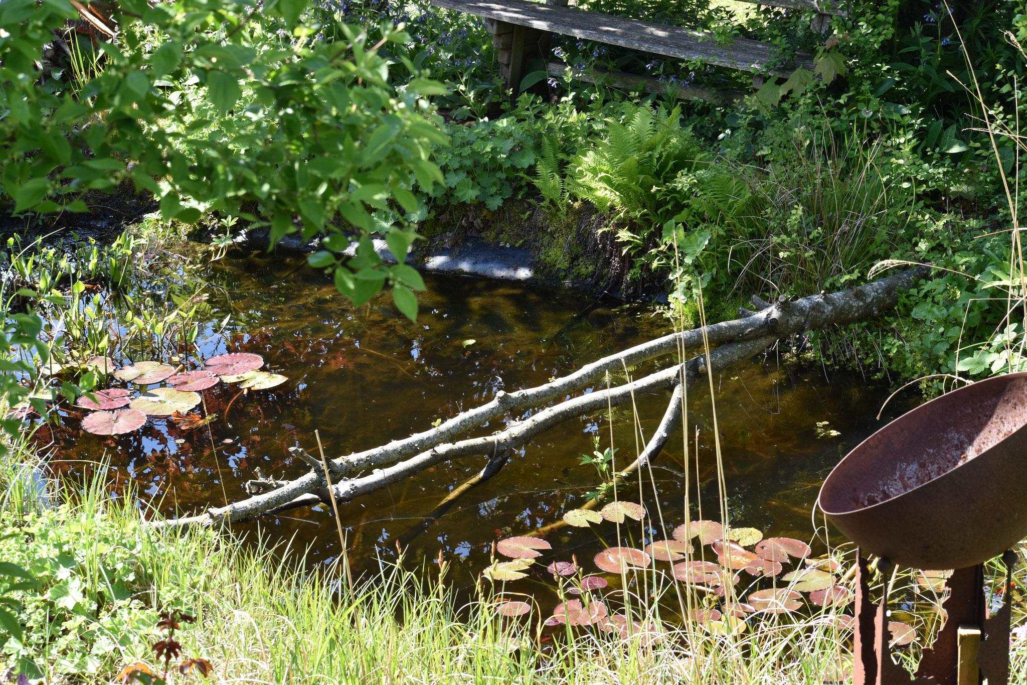 Teich mit Ast als Rastplatz für Insekten und Vögel  (Foto: H. Seiß)