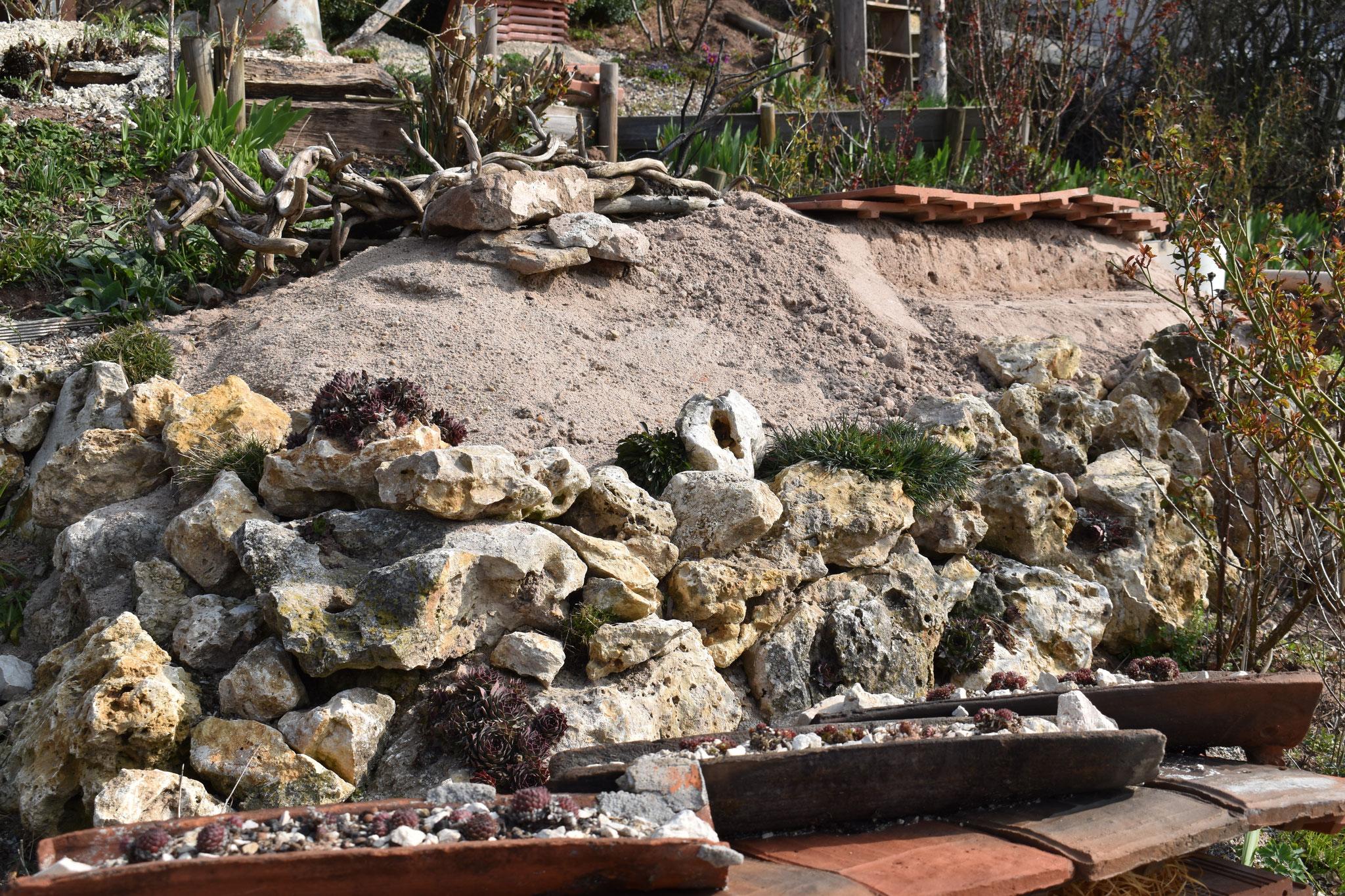 Gestaltungselement Sandarium mit heimischen Wildpflanzen wie Sandglöckchen Hauswurz, Steinbrech-Felsennelke (Foto: H. Seiß)