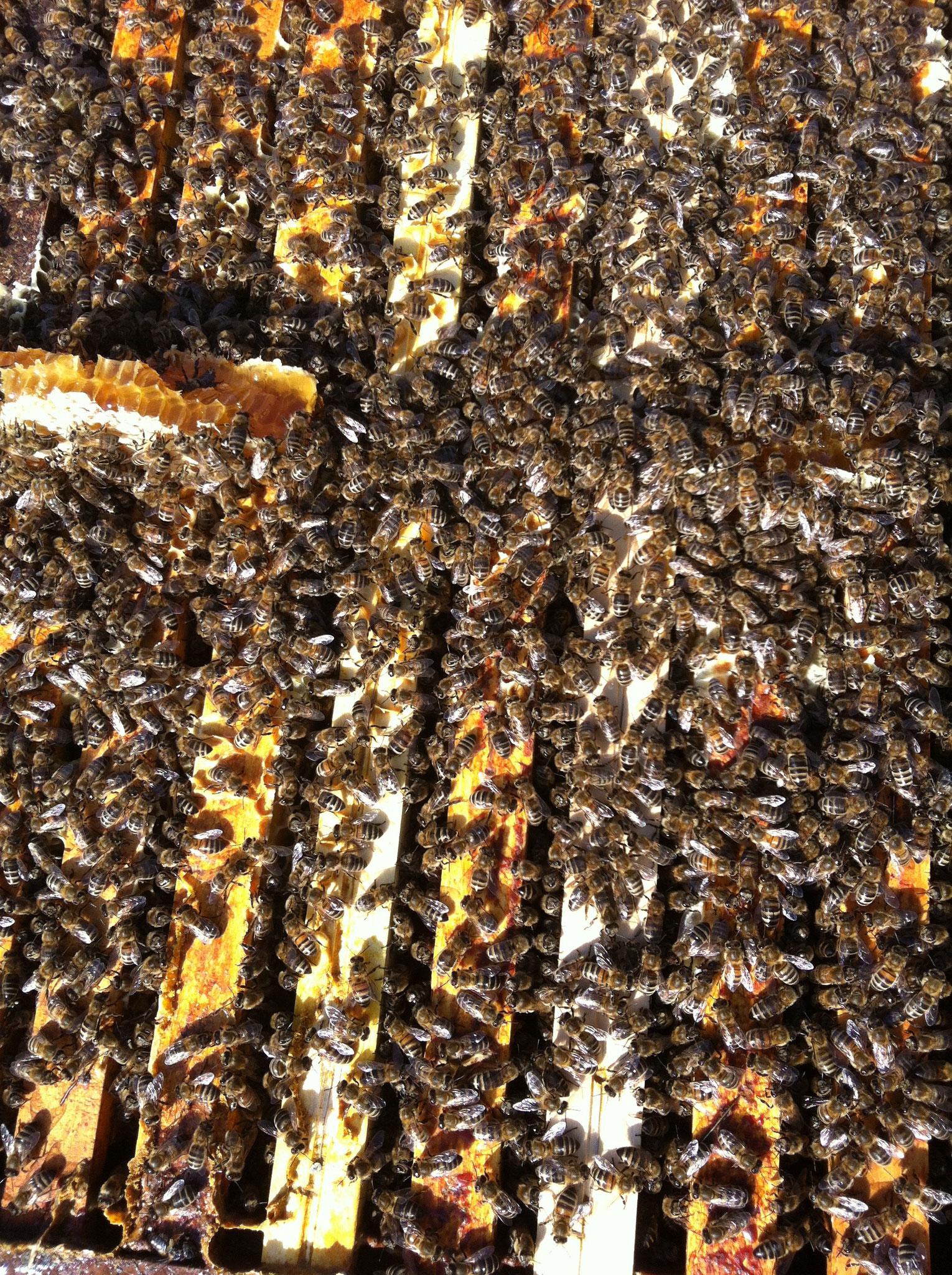Ruche pleines d'abeilles