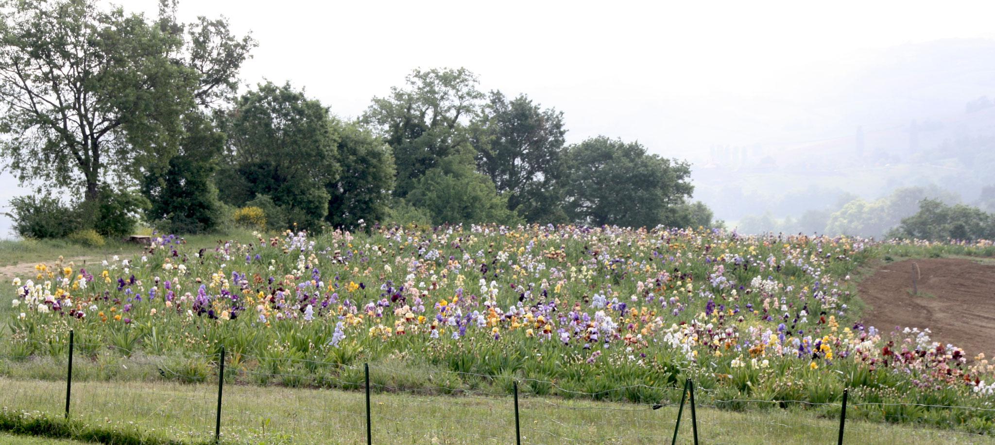 Le pic de floraison