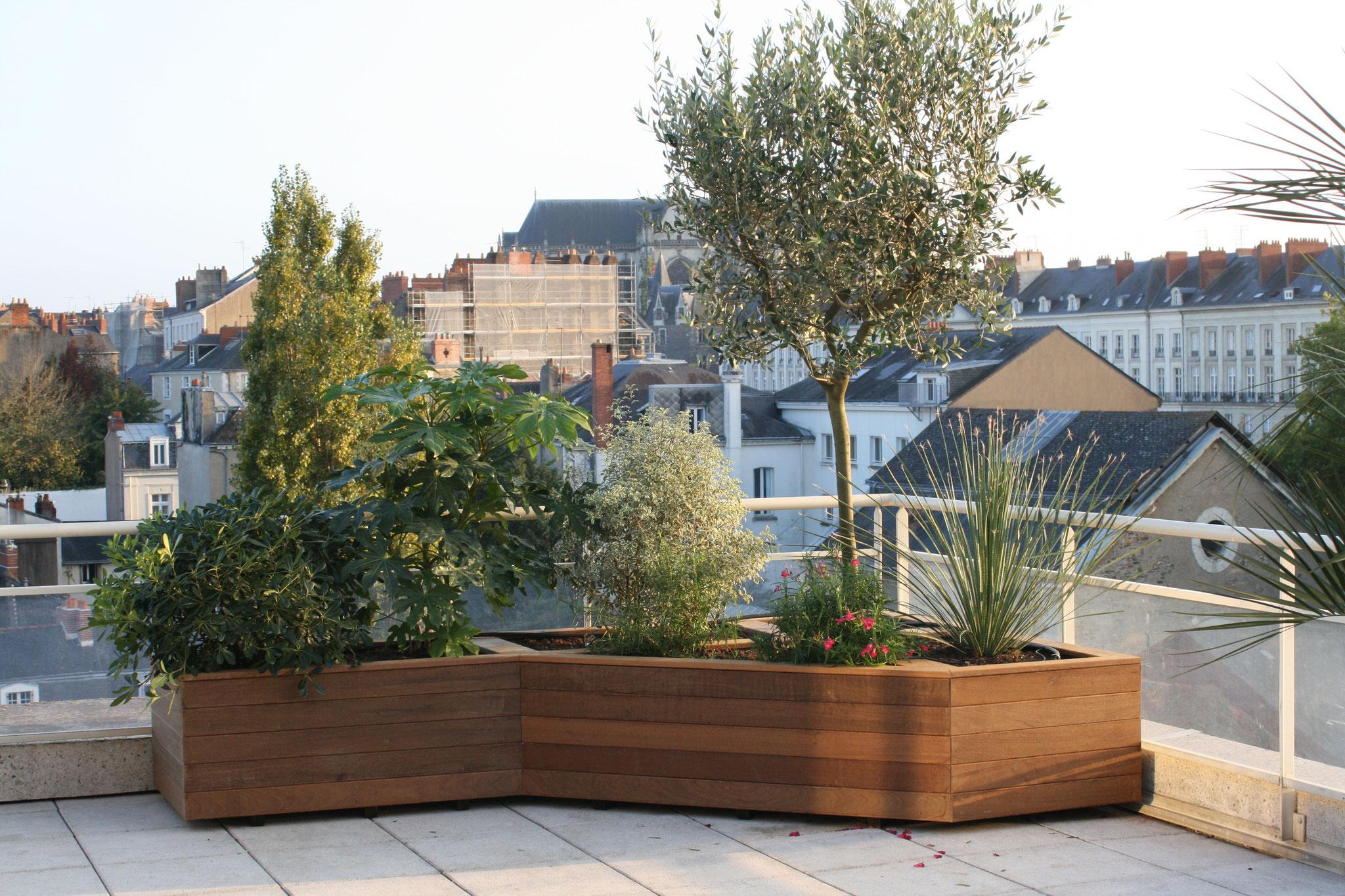 Bacs en bois en terrasse