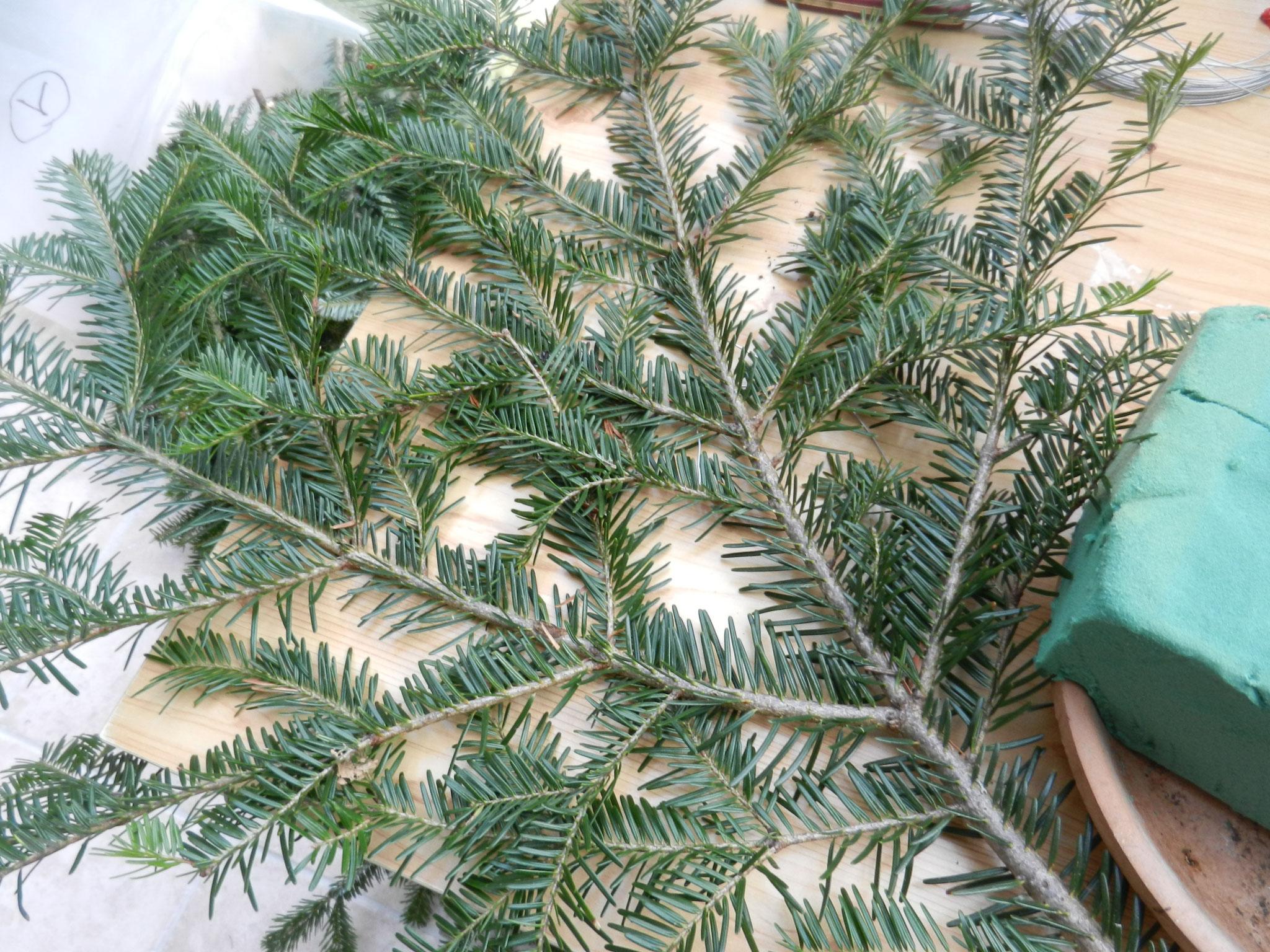 Prendre des branchesde sapin ou autres