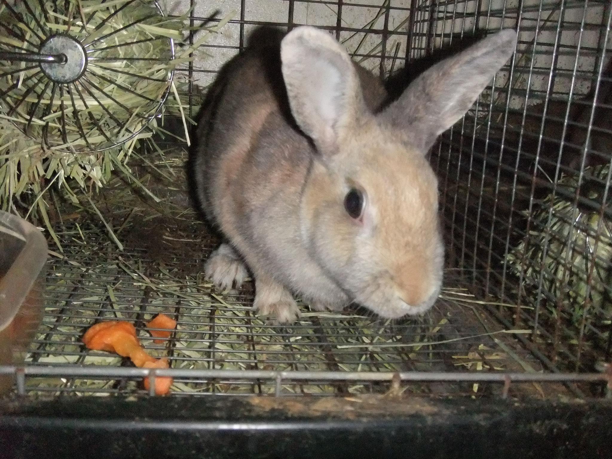 ミニウサギ リーフ