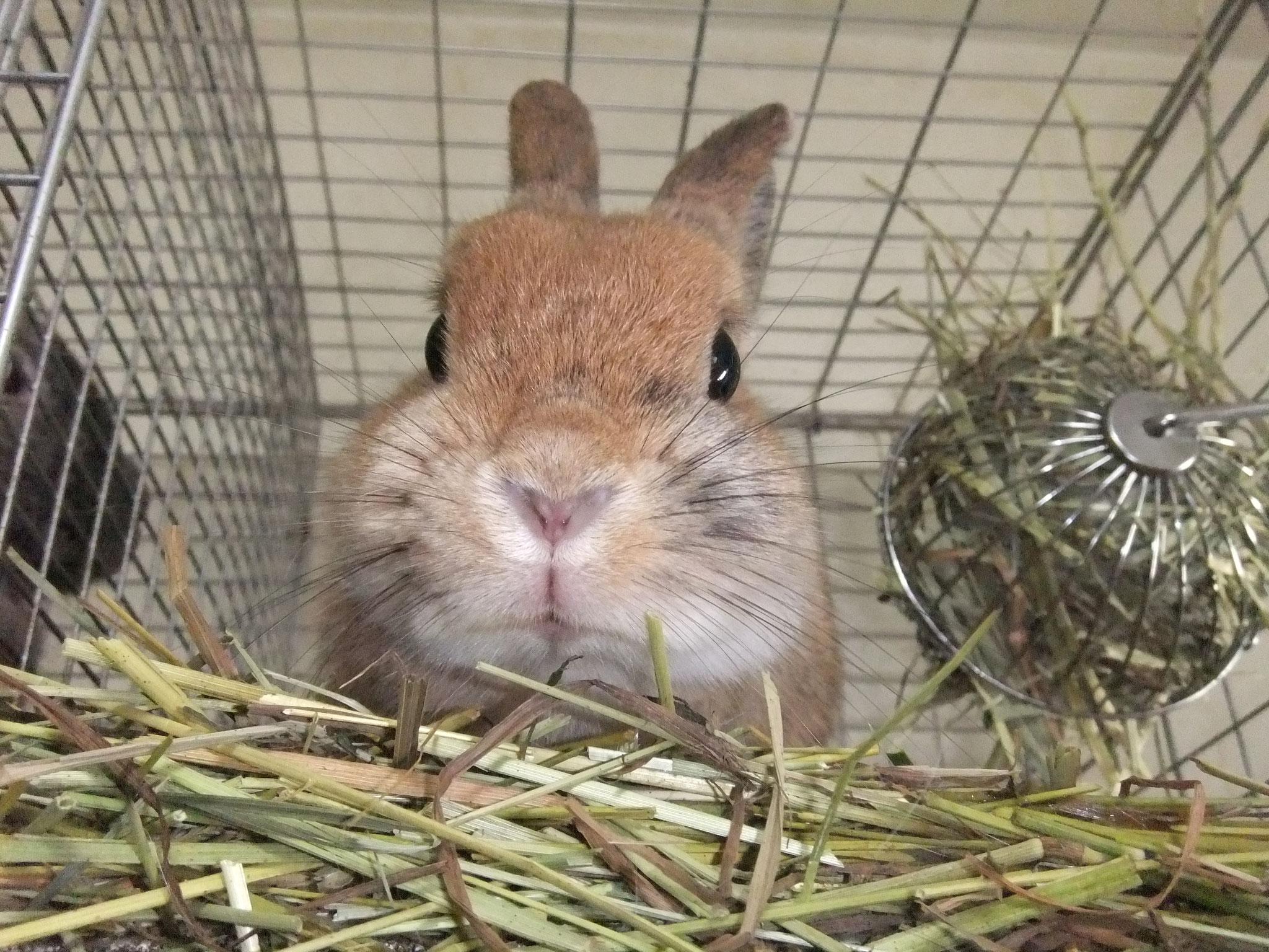 ミニウサギ 小梅