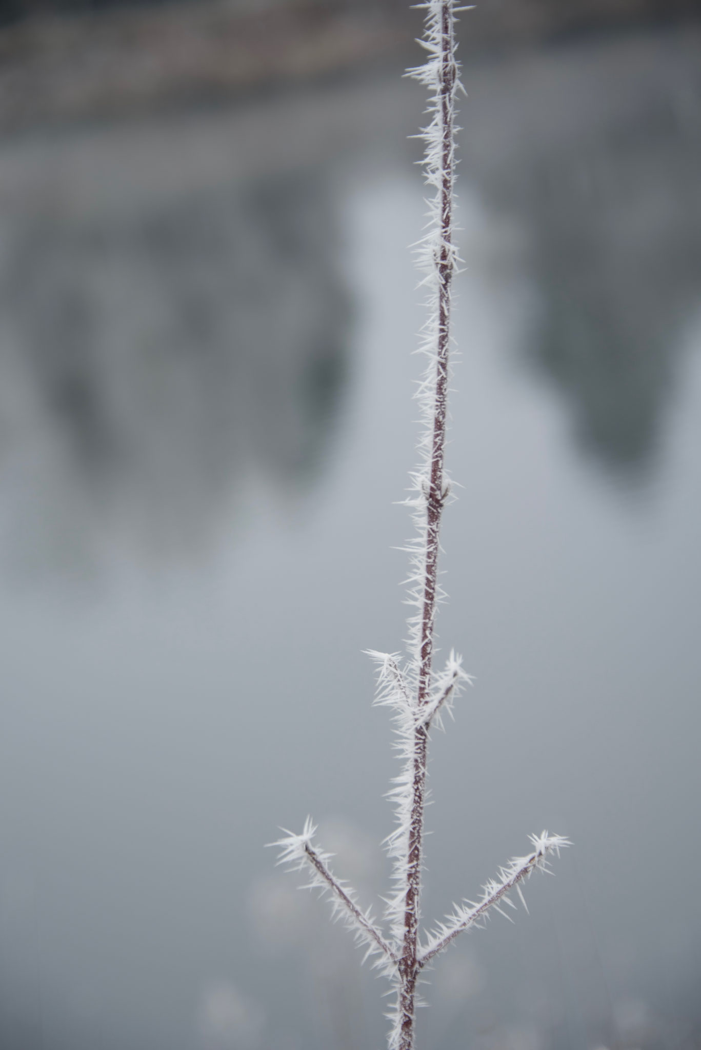 Frost 3