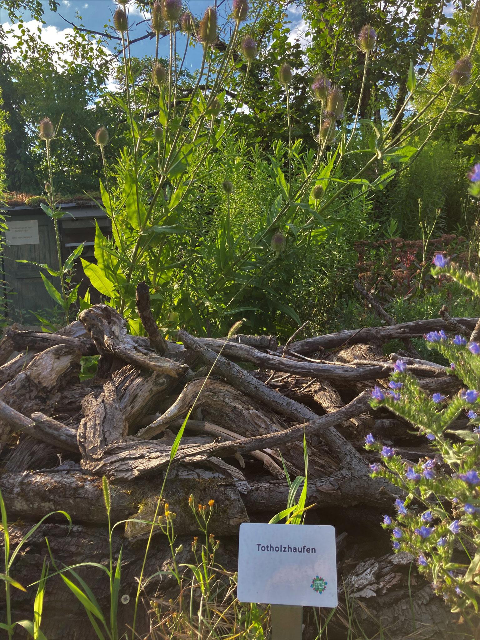 Totholzhäufen bieten Insekten Verstecke, Futter, Nistplätze
