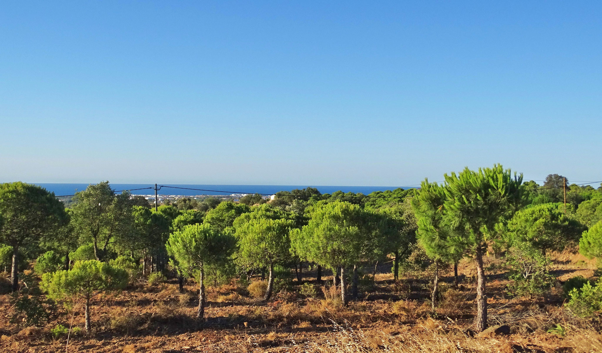 nochmal dieser tolle Kontrast der sattgrünen Schirmpinien zum Meeresblau und dem Himmel ... ich liebe das