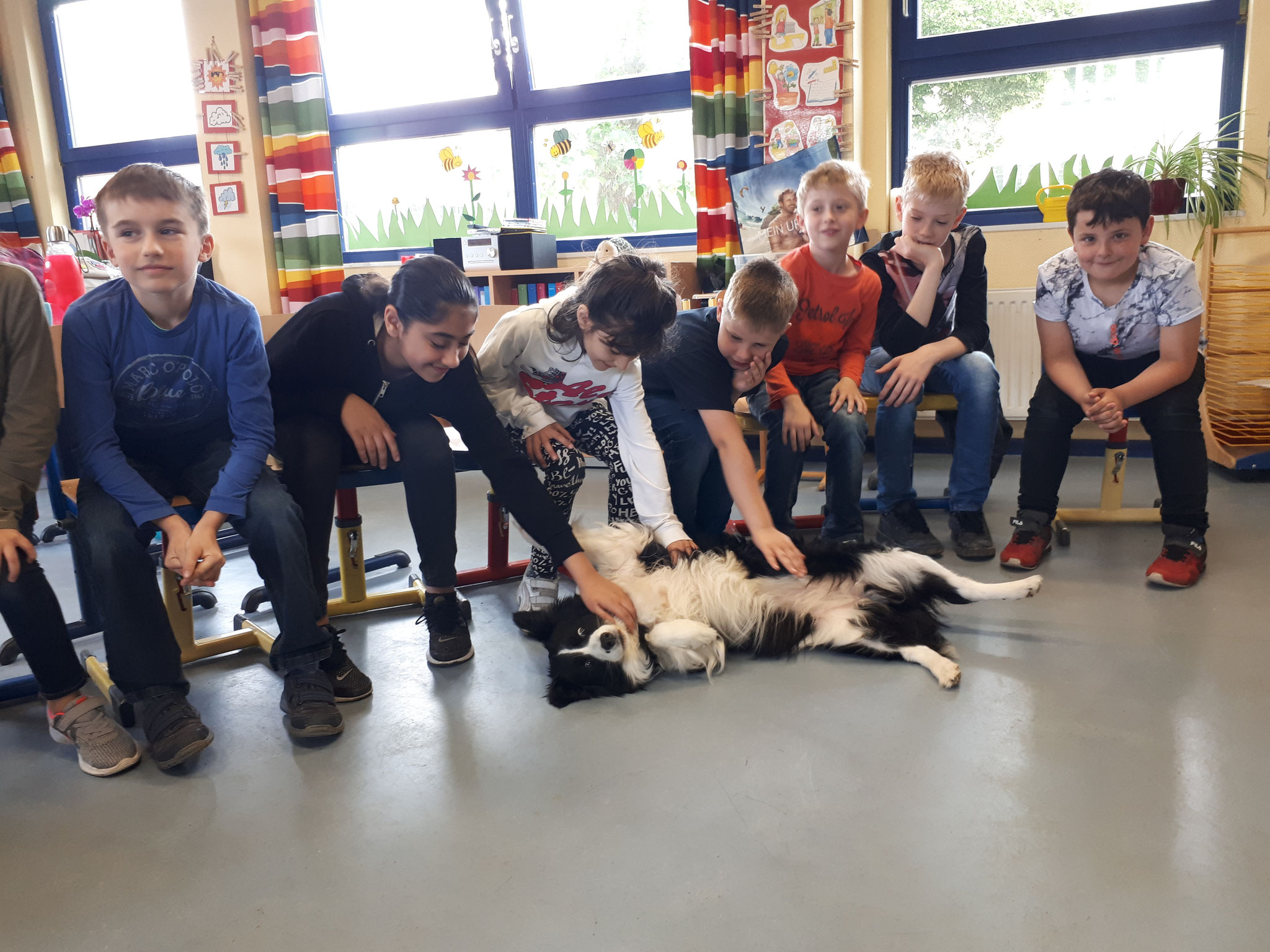 Hunde: Hundetrainerin Bianca Ngyen kommt mit Suri