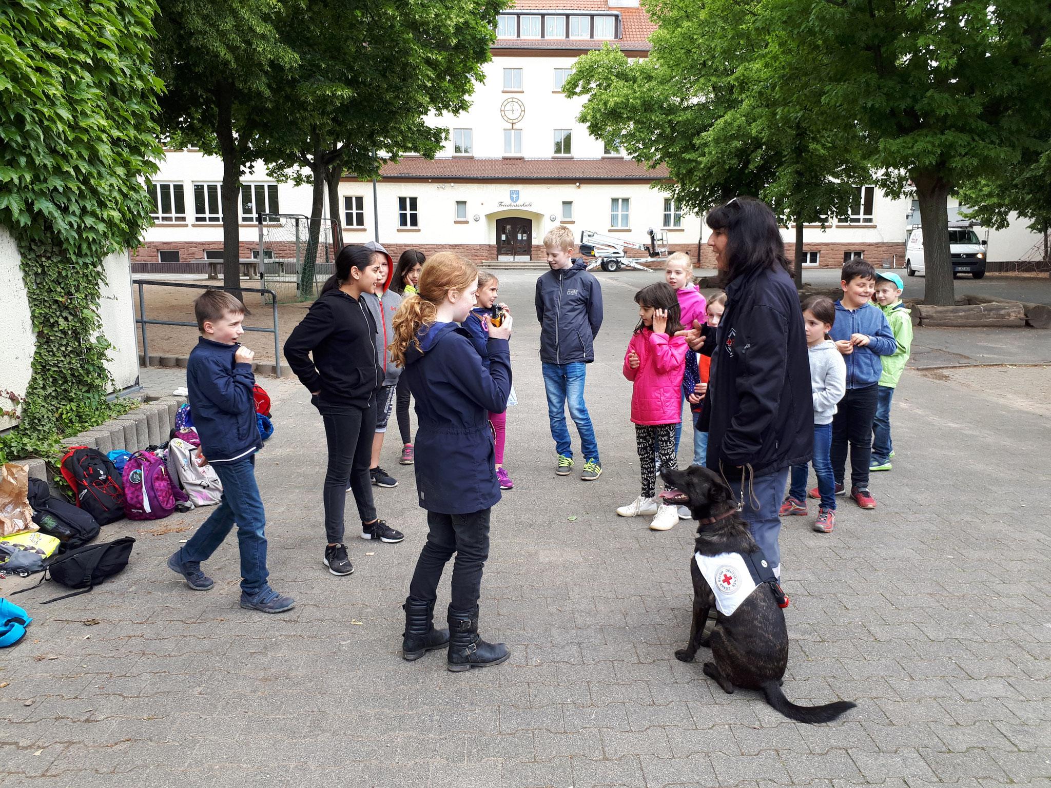 Hunde: Rettungshundestaffel