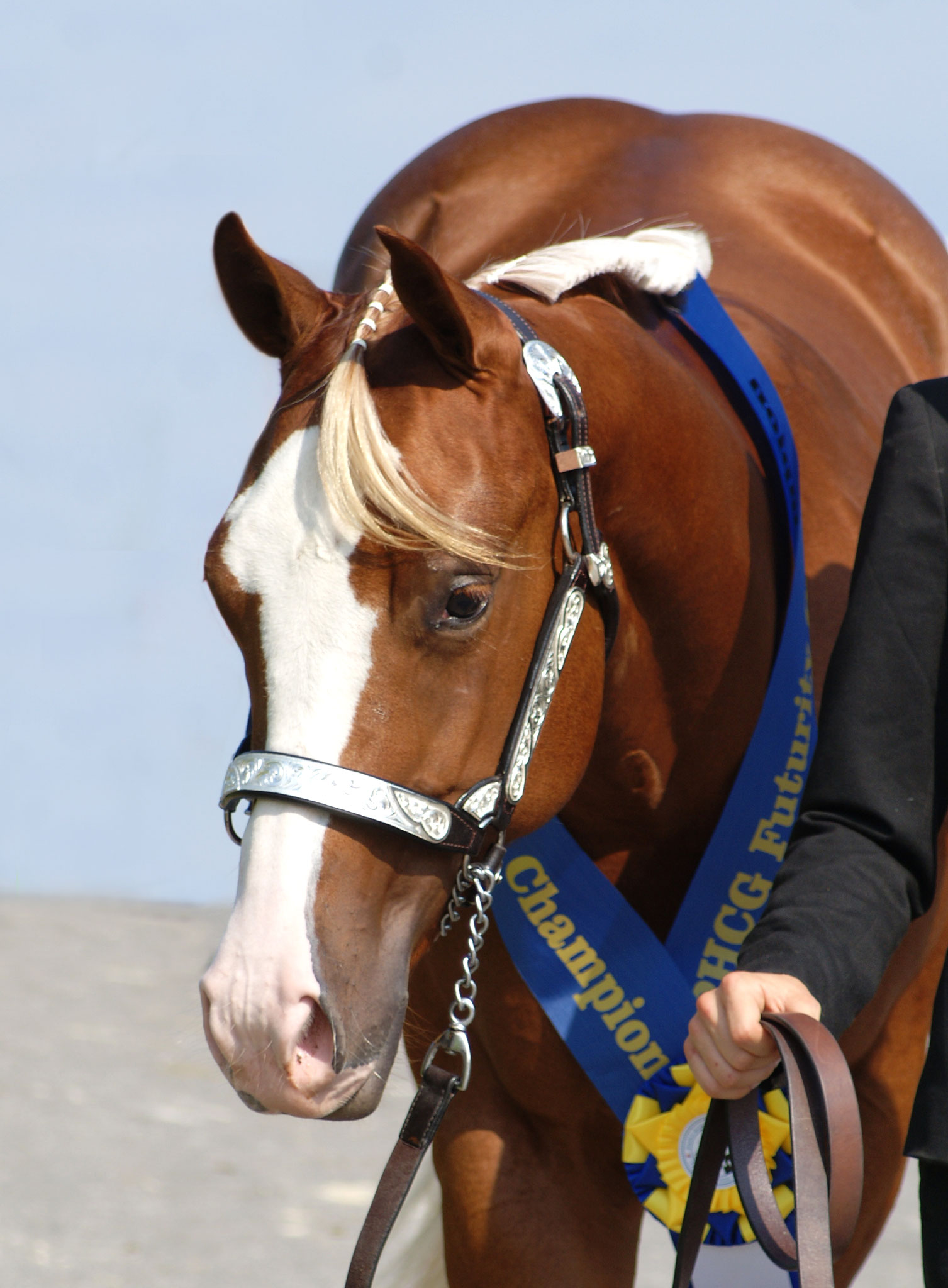 edaecc160898 Showhorses - katja-altenstrassers Webseite!