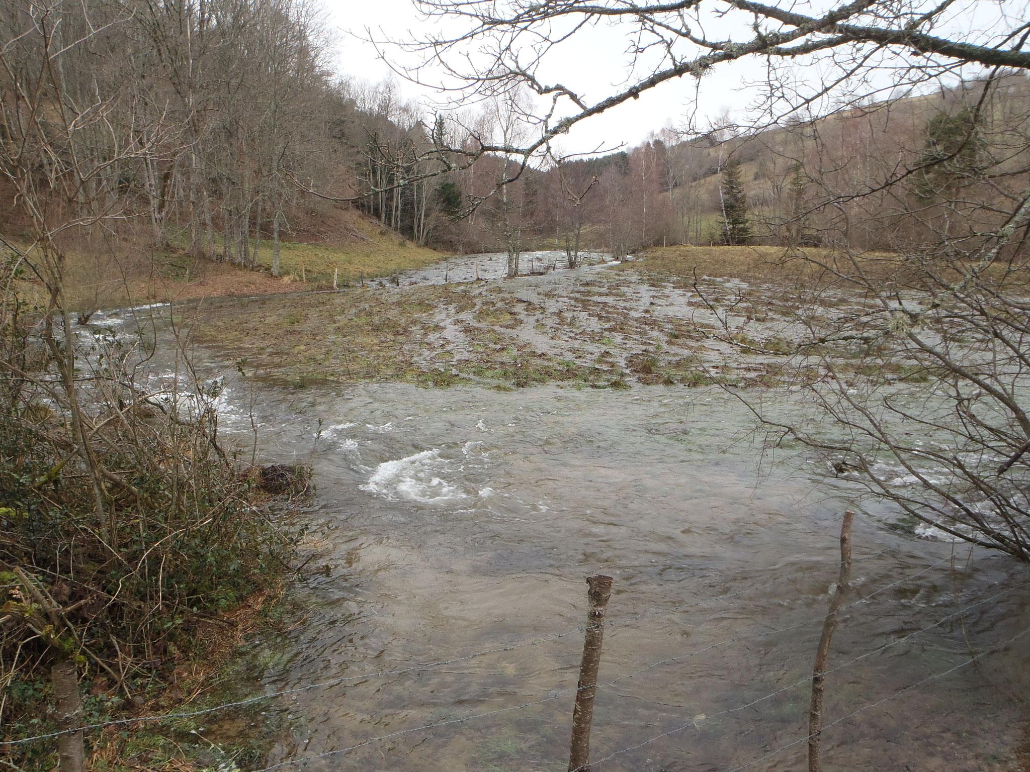 Le Lignon en amont du pont sagnat - Jeansagnière