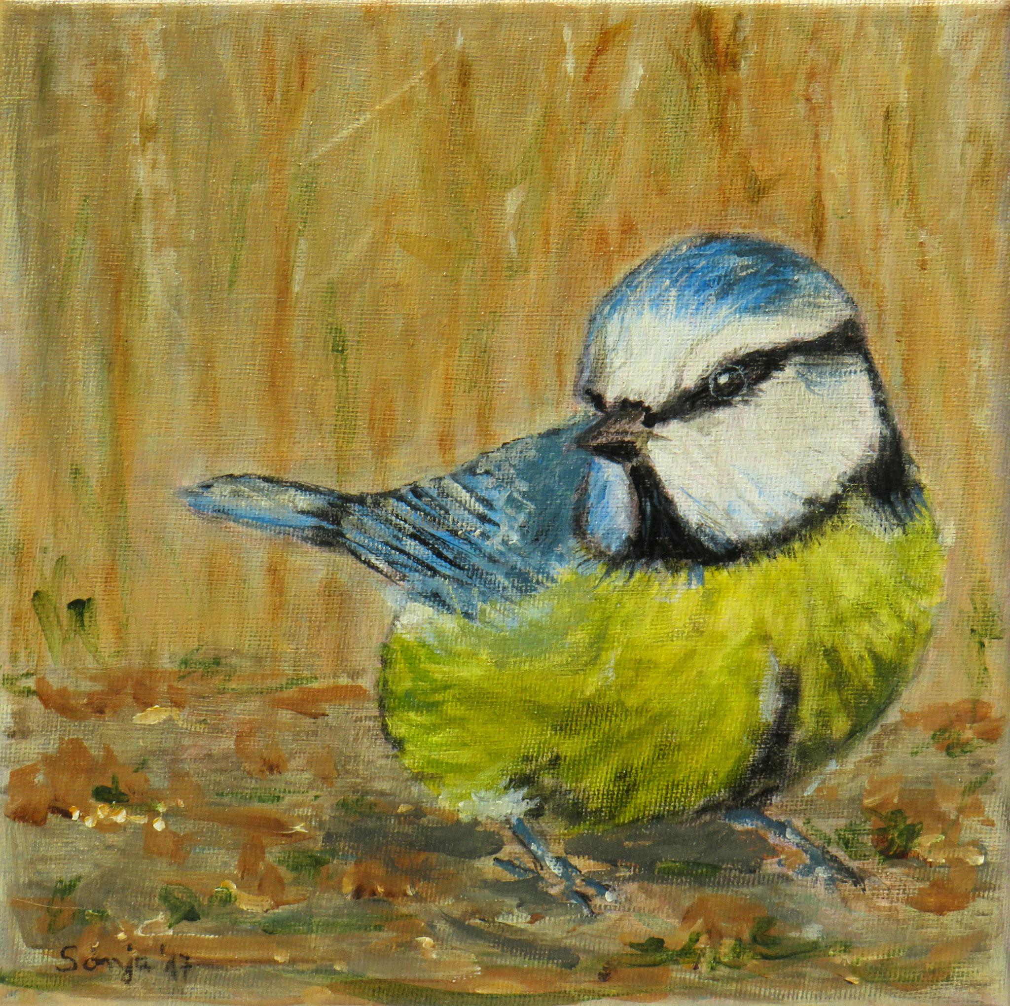 """""""Blaumeise"""", Acryl auf Leinwand, 20 x 20 cm"""