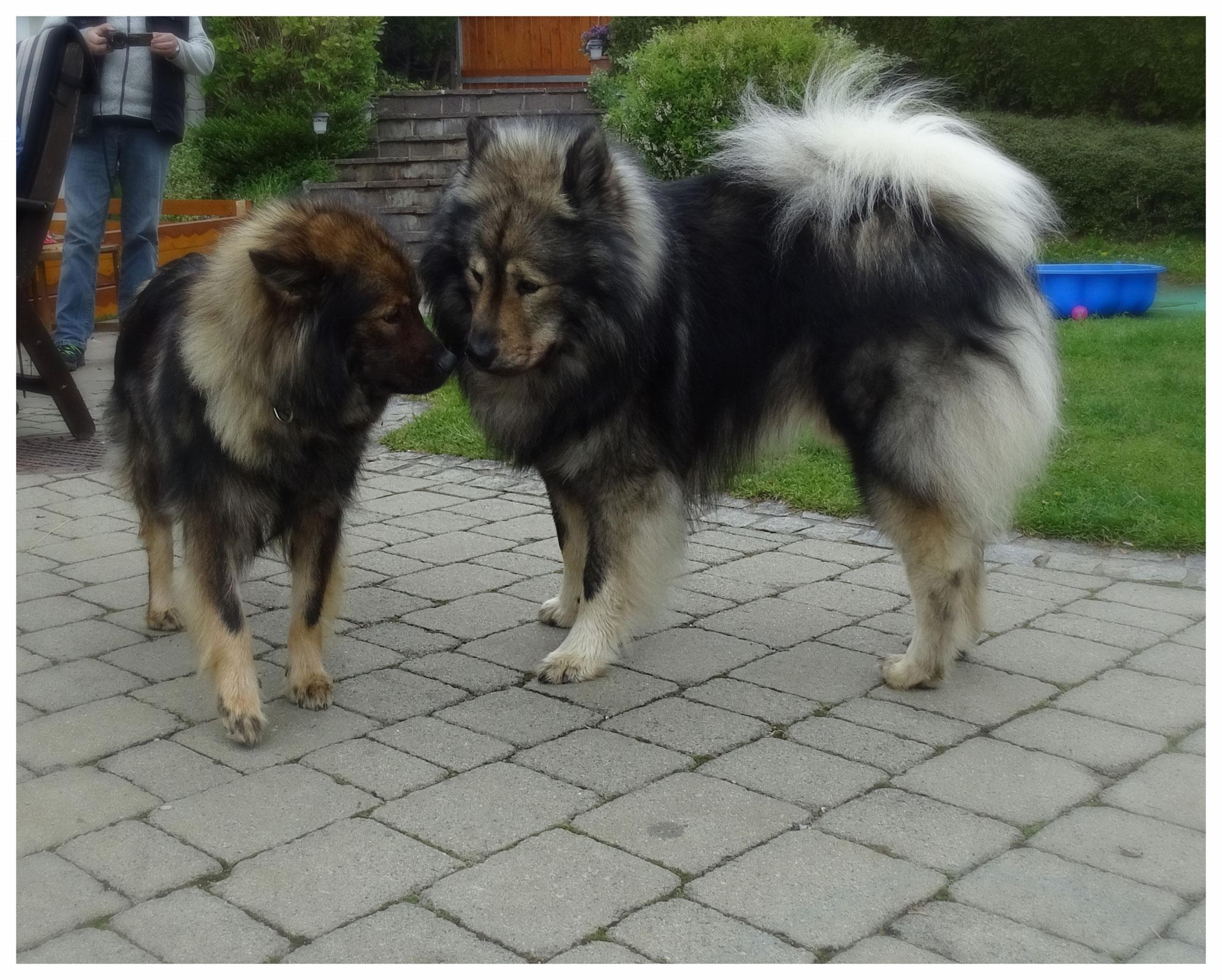 Enja und Emino von Askerta