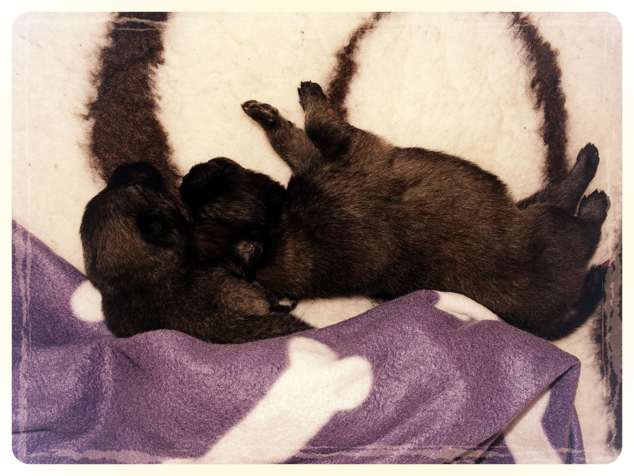 Aisha & Aurora ... endlich ist die kleine Schwester wieder zuhause!