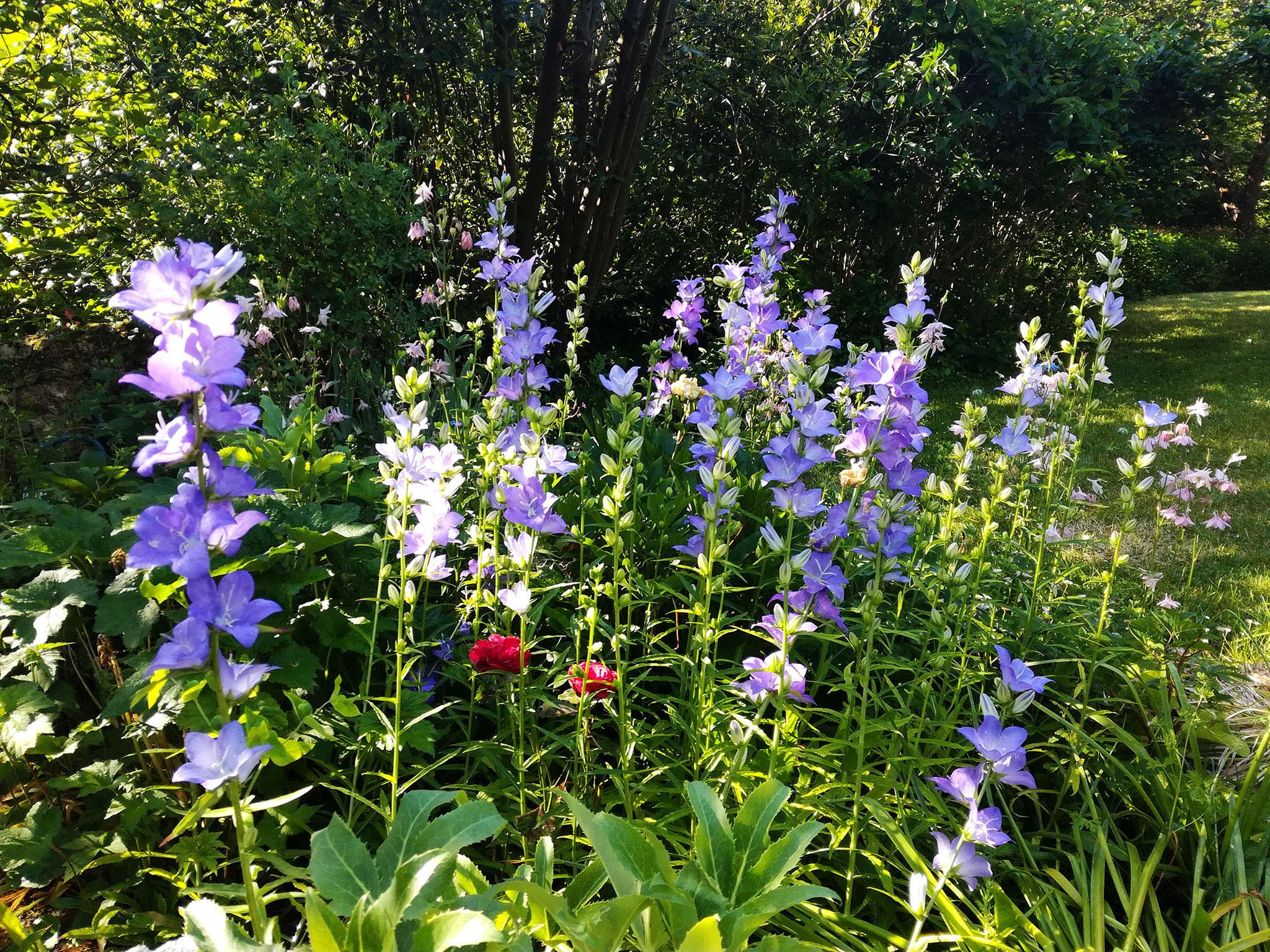Des fleurs en toutes saisons... - Chambres d\'hôtes et ...