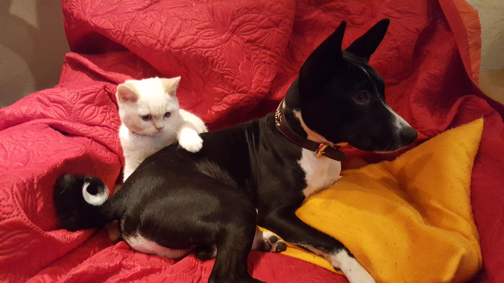 Bild eins zeigt unseren Bunny mit seinem neuen kleinen Freund...