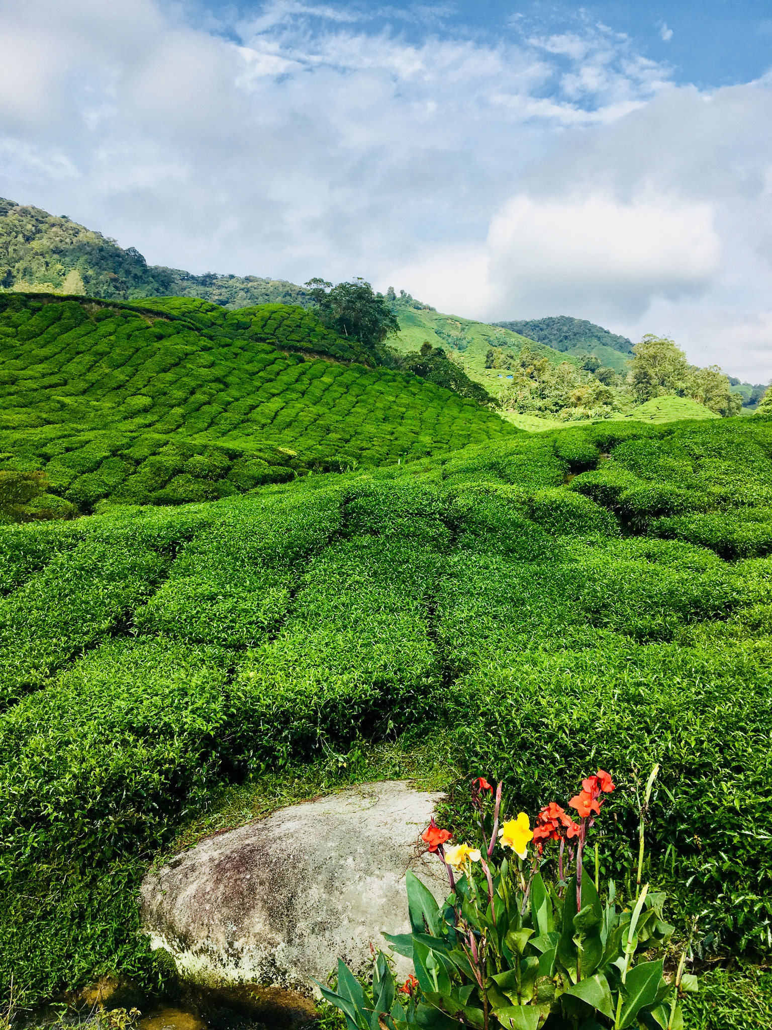 Cameron highlands. Photo credits to Krystle