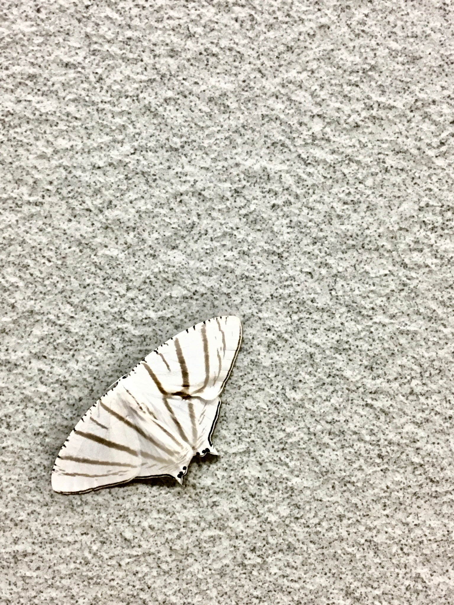 Moth. Photo credits to Krystle
