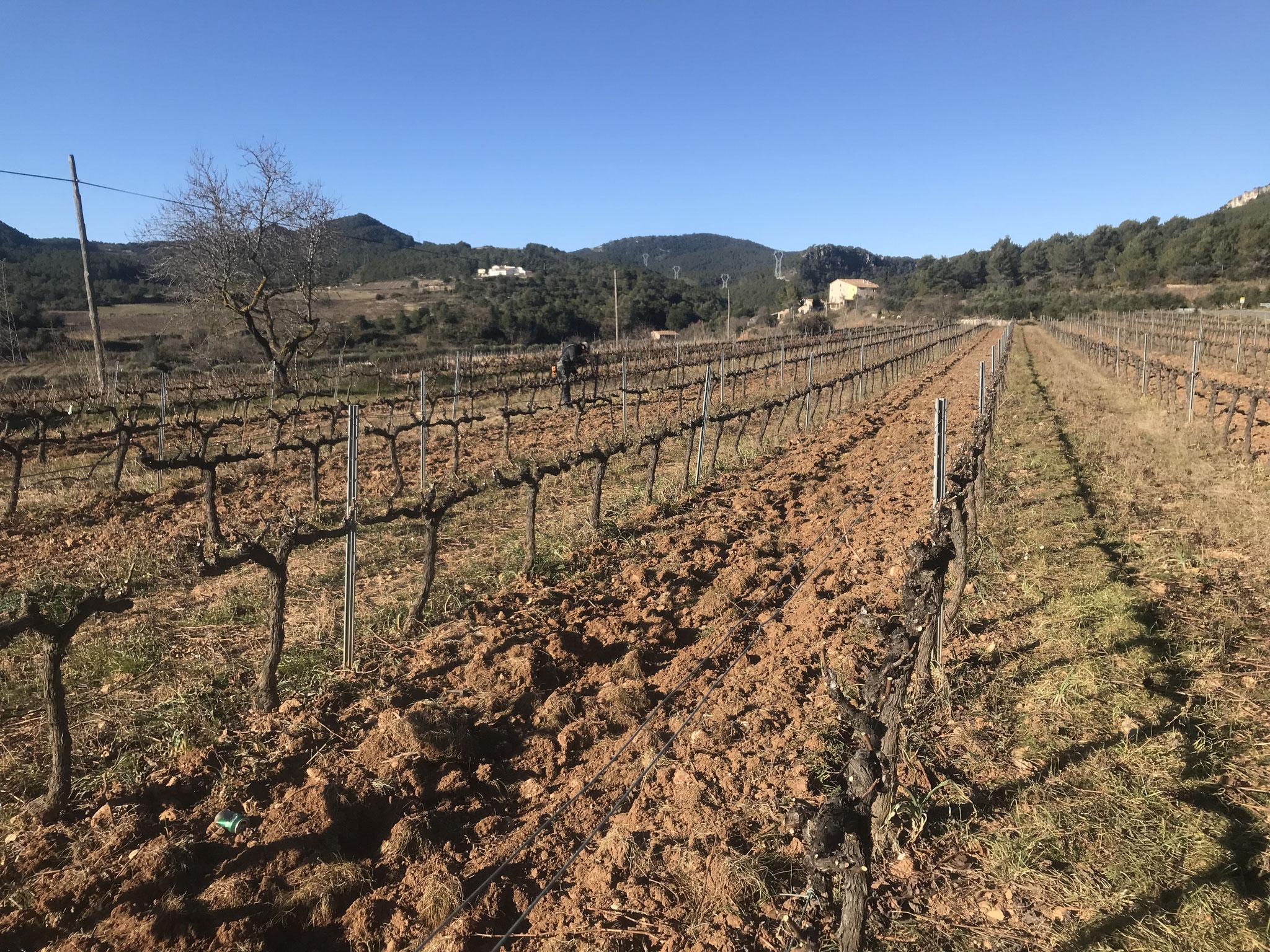 La casa des de les vinyes