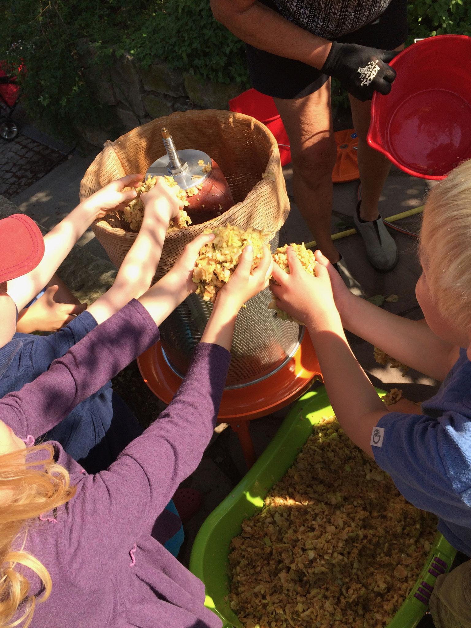 Im Herbst ernten wir Äpfel und pressen eigenen Apfelsaft