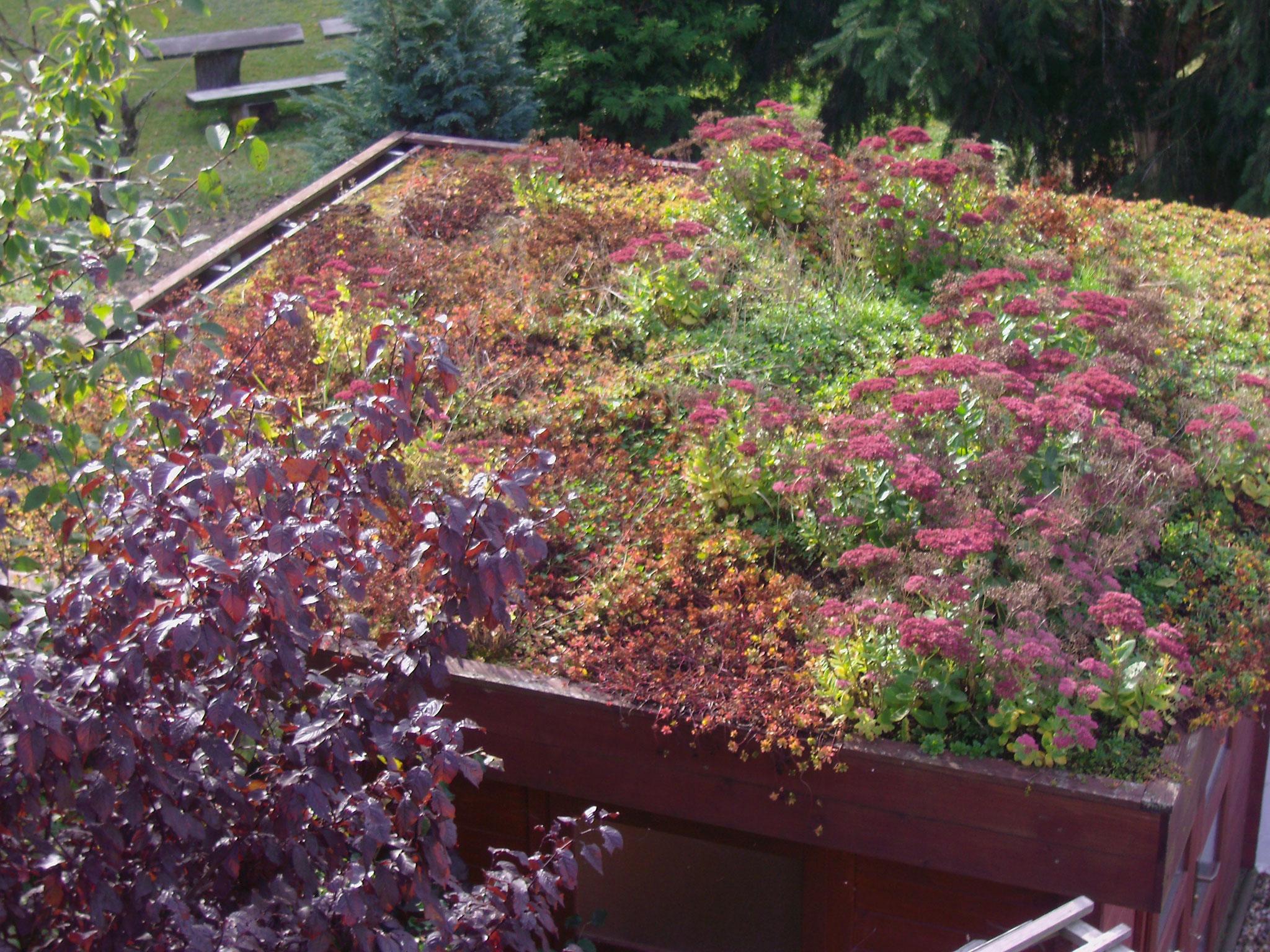 bewachsenes Dach: Sukkulenten