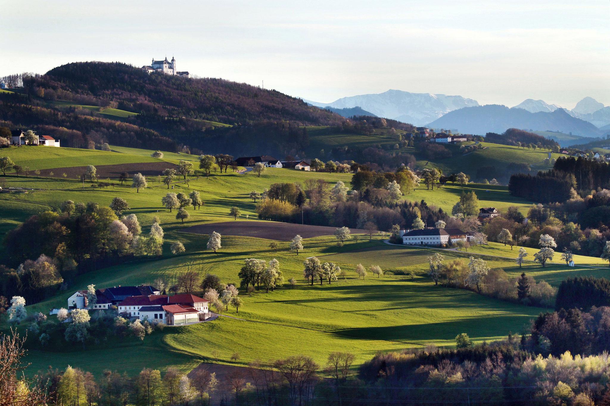 Ausblick auf das Mostviertler Hügelland - © Weinfranz