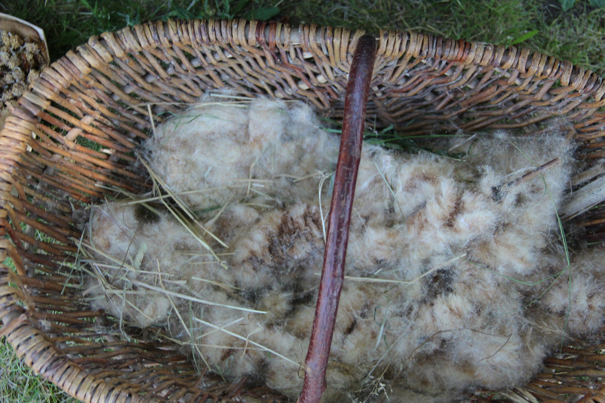 Unser Materialien: Samen vom Schilf - sieht aus wie Wolle