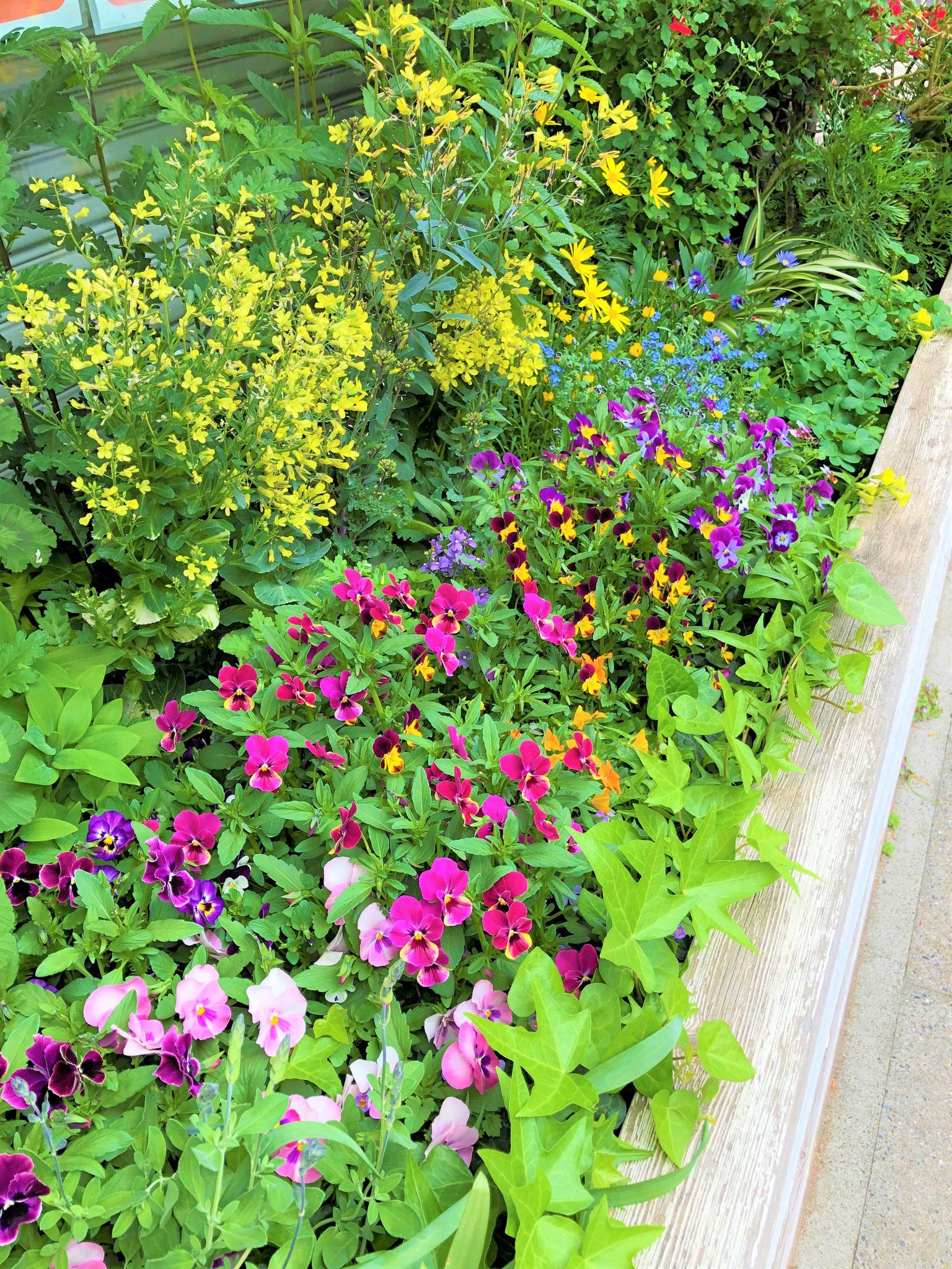 事務所前の花壇