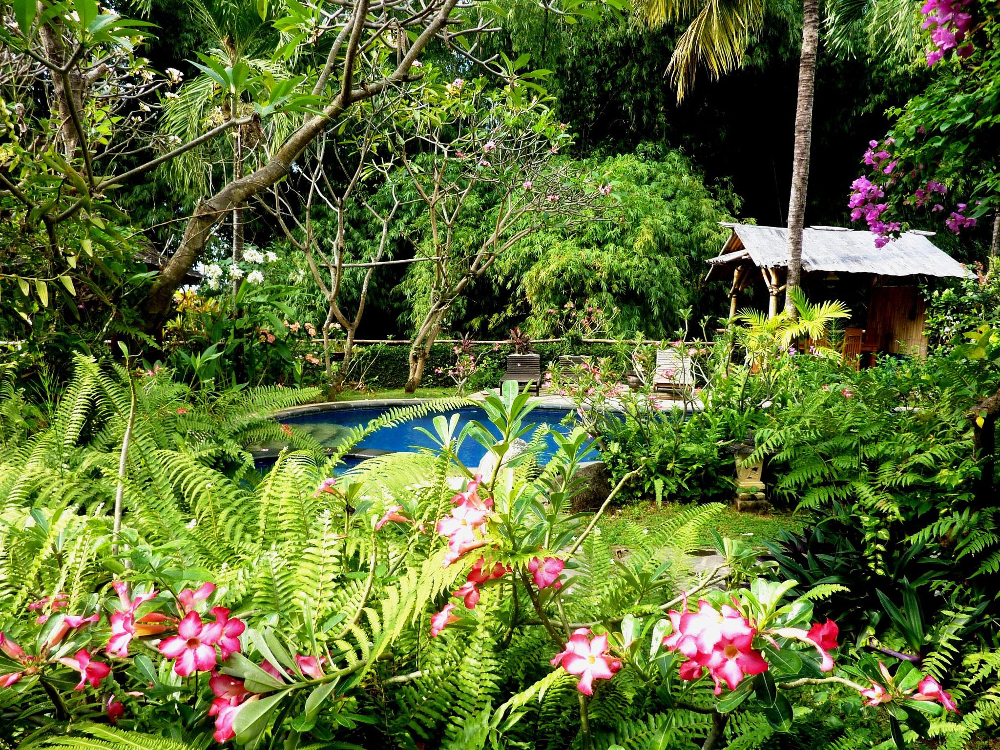 bluehender tropischer Garten
