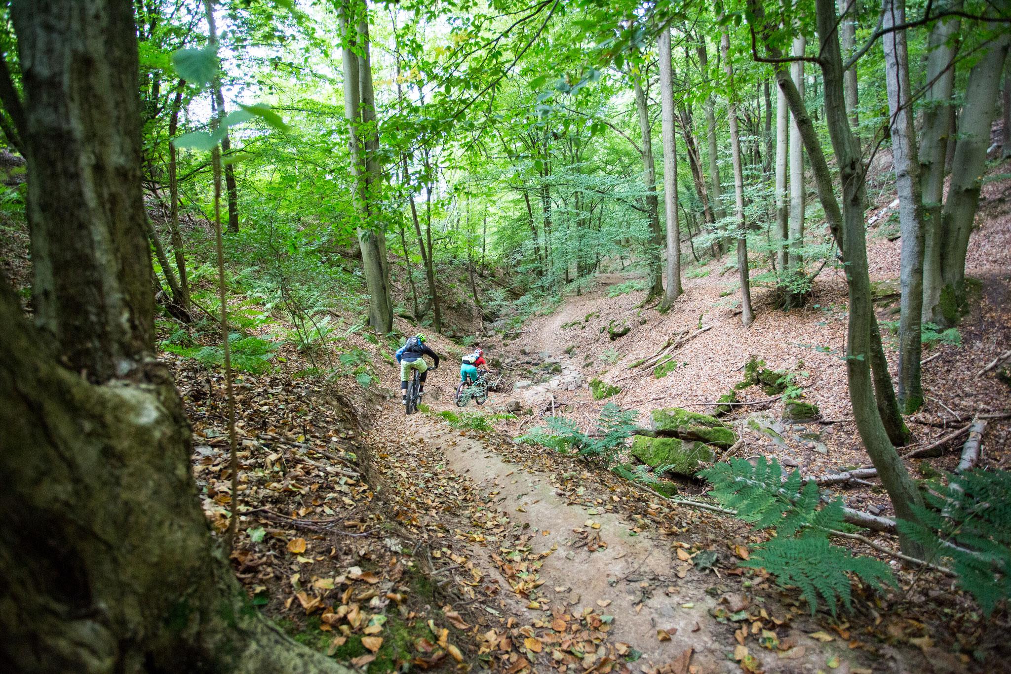 Wald Singletrail