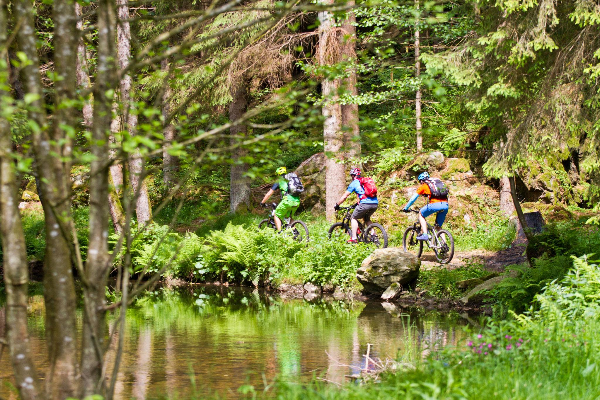 Wald Trail