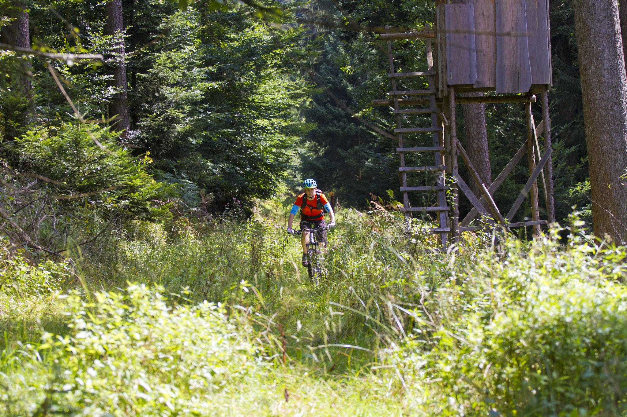 Ruhrpott Wald
