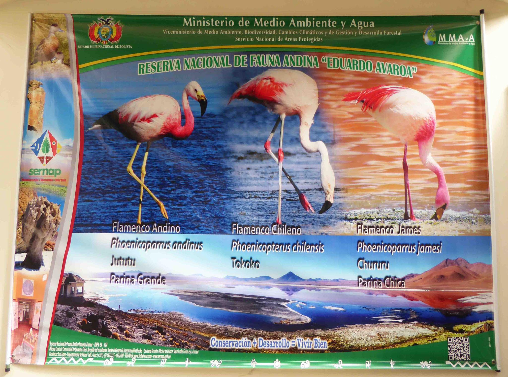 Nous pénétrons dans la réserve nationale de faune andine Eduardo Avaroa (7148 km²)