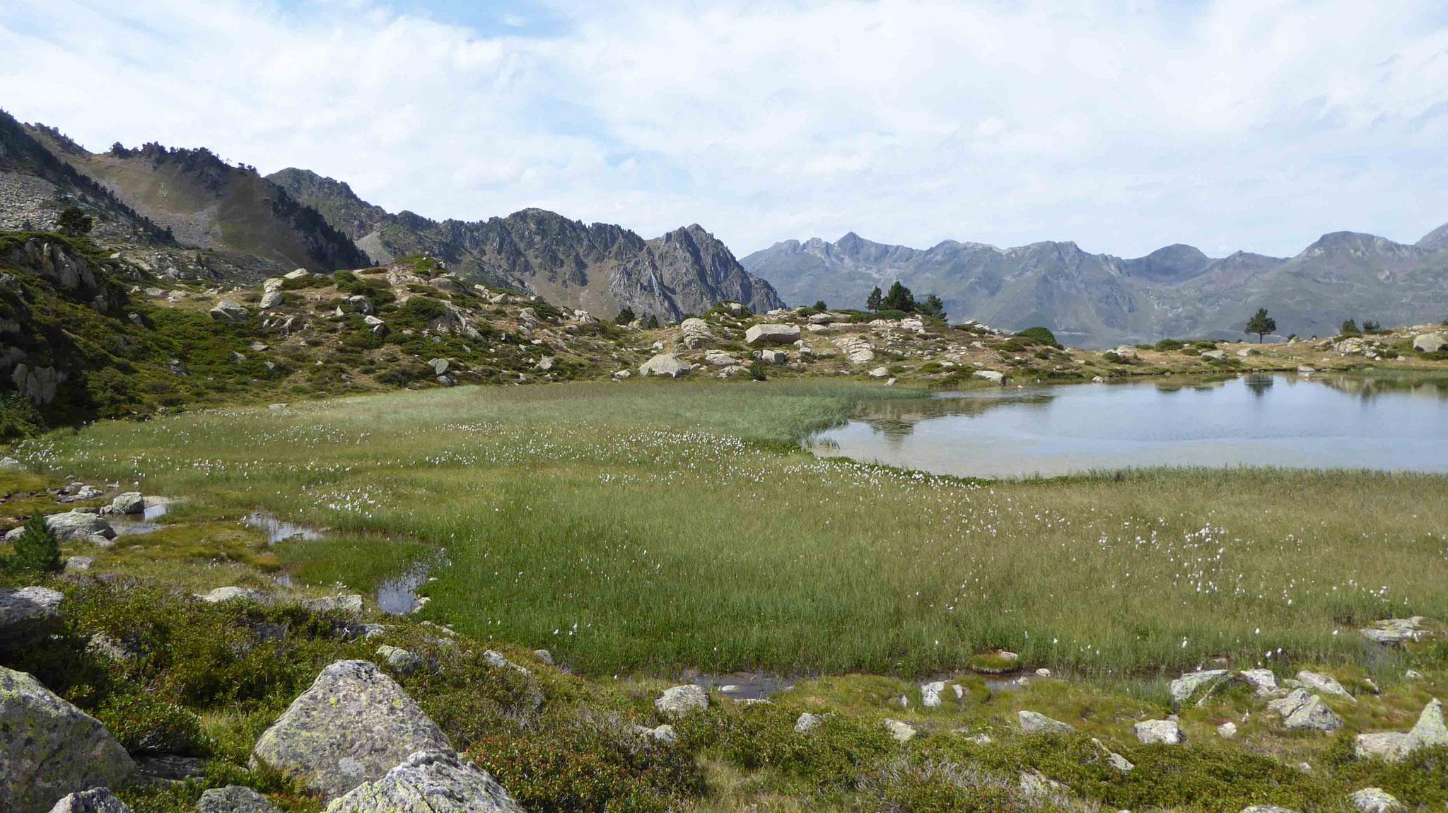 Le lac de la Jonquère bordé de sa flore aquatique