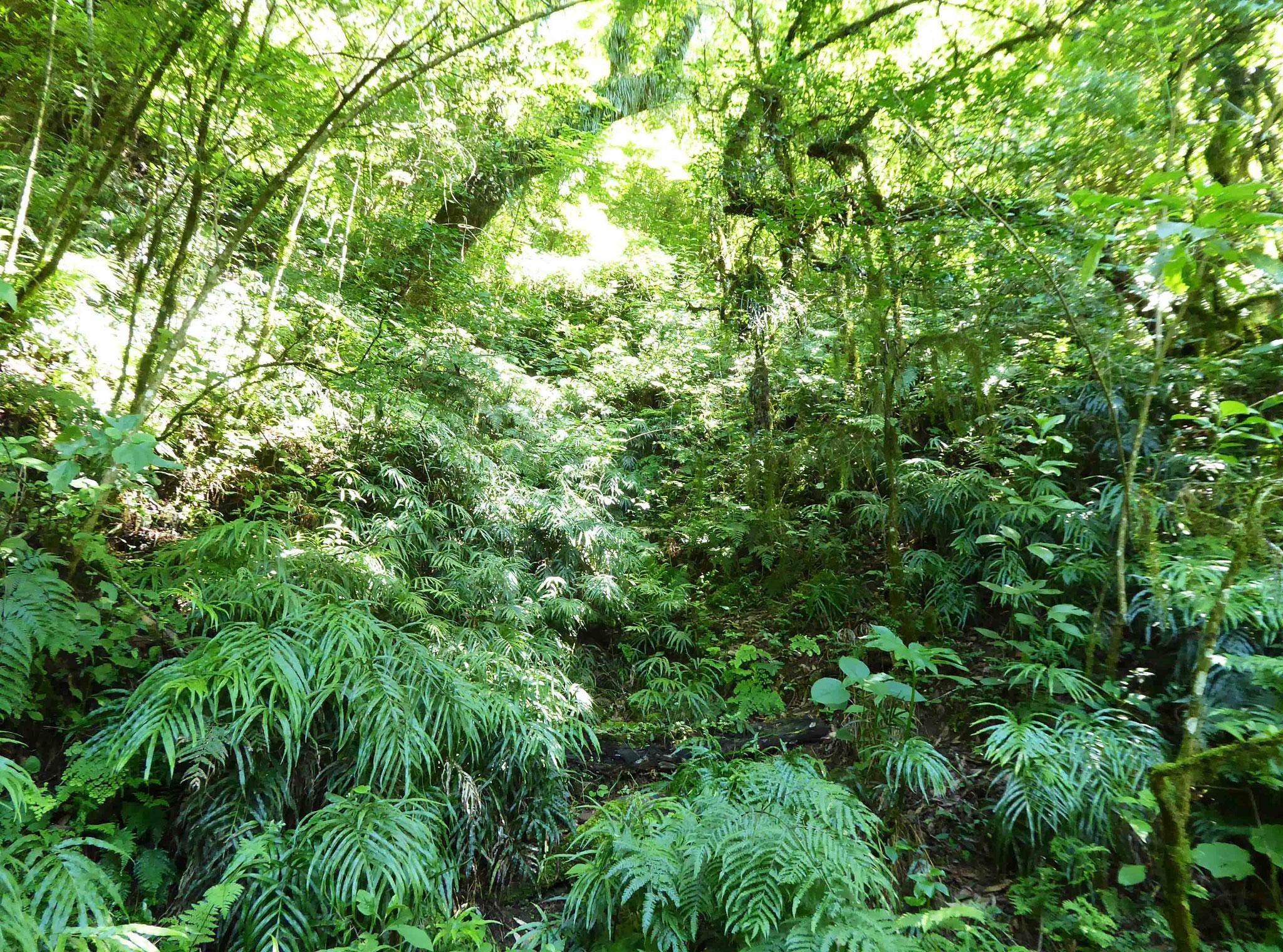 Véritable forêt équatoriale avant d'entreprendre notre ascension vers Abra de la Cruz