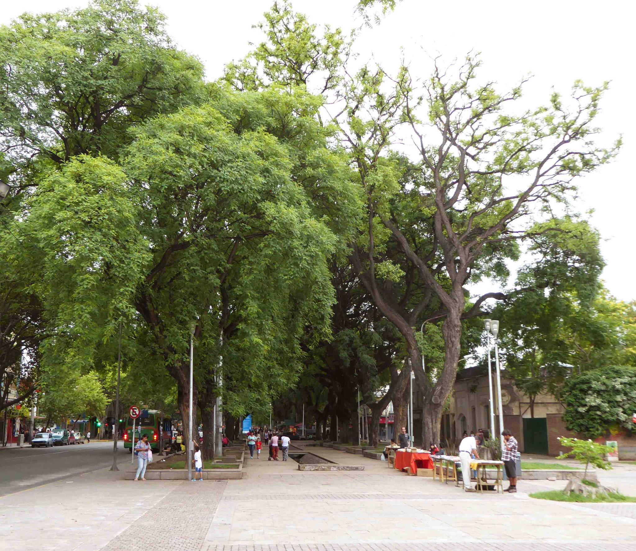 Recherche de fraîcheur dans les rues ombragées de Mendoza